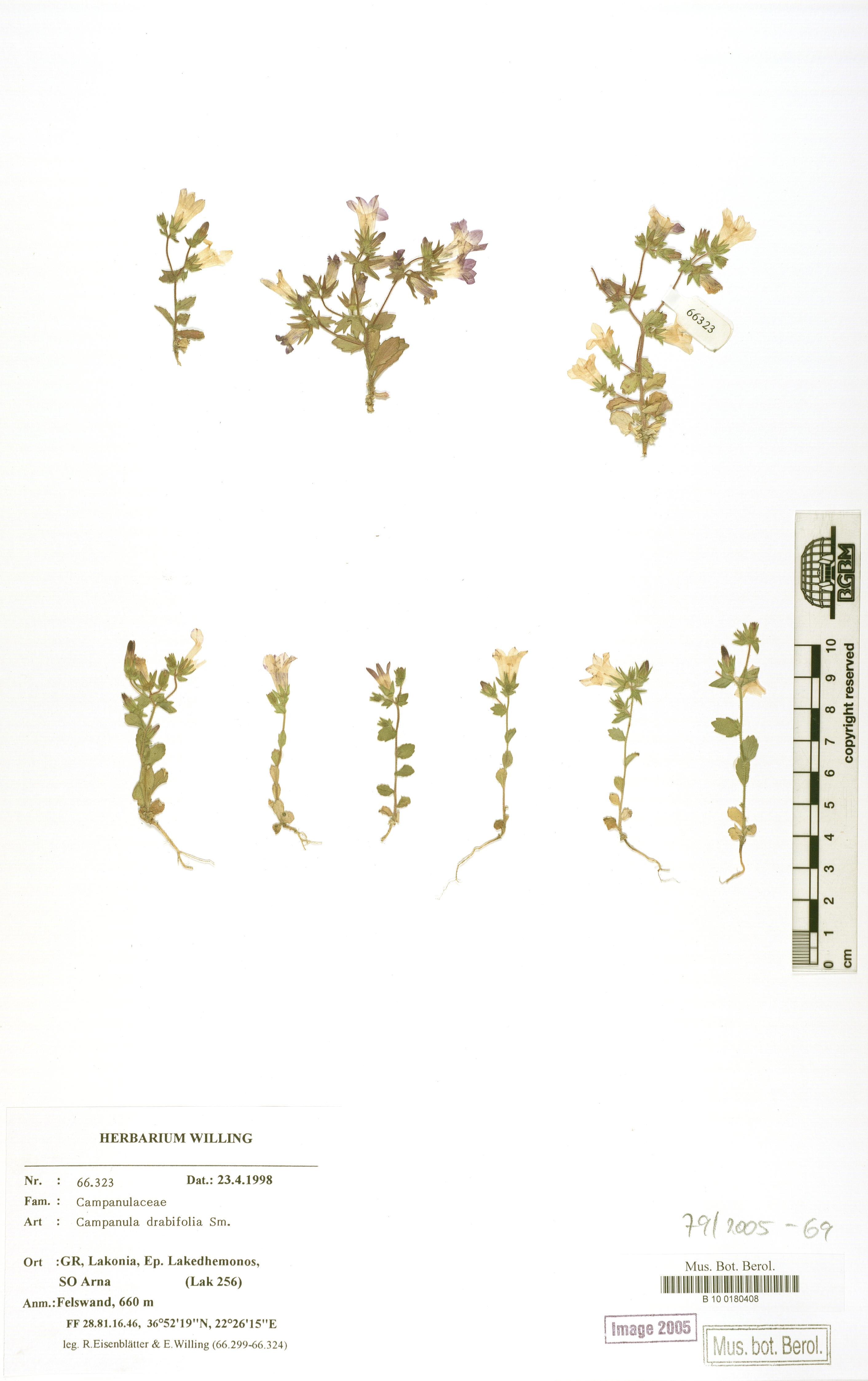 http://ww2.bgbm.org/herbarium/images/B/10/01/80/40/B_10_0180408.jpg