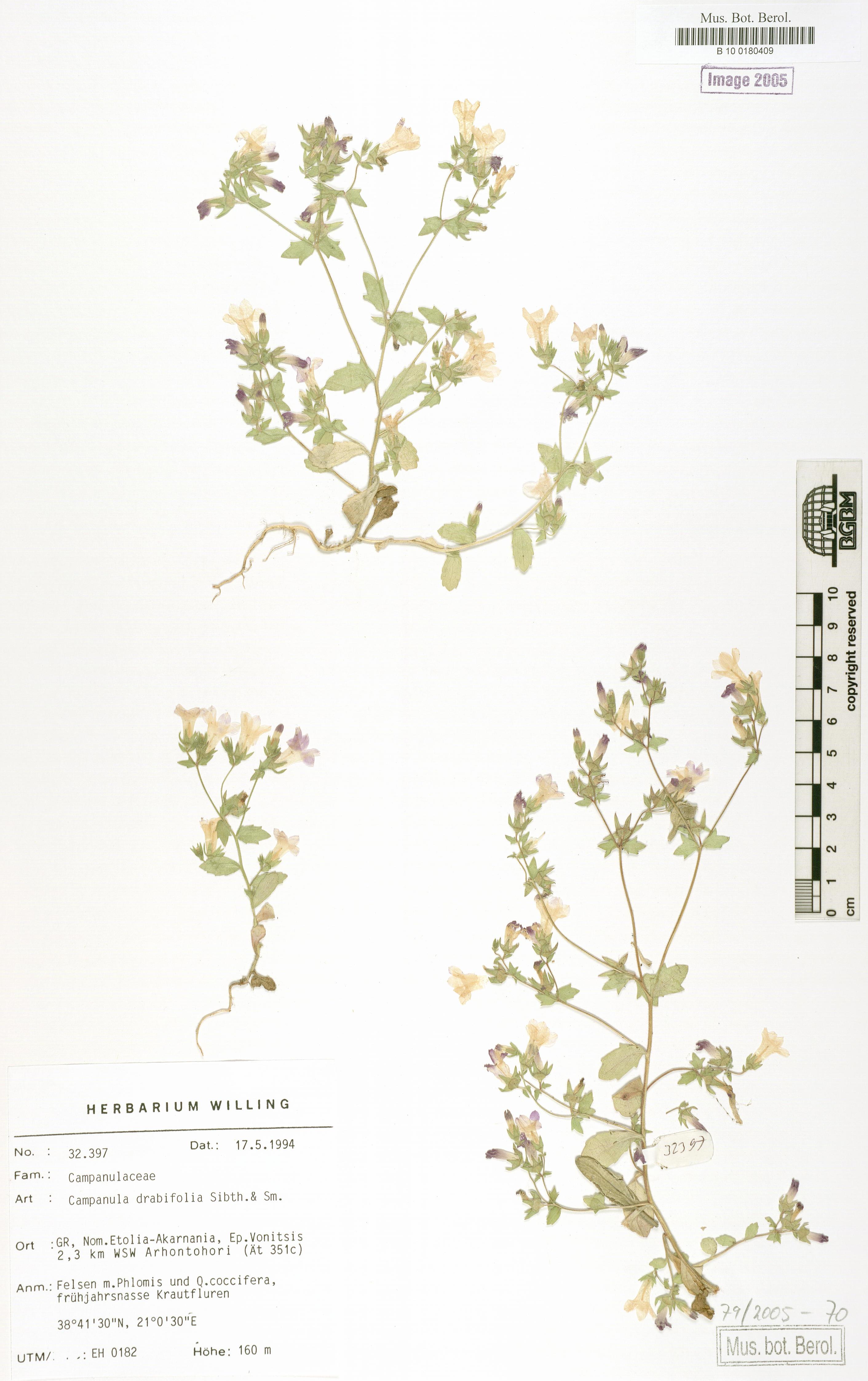 http://ww2.bgbm.org/herbarium/images/B/10/01/80/40/B_10_0180409.jpg
