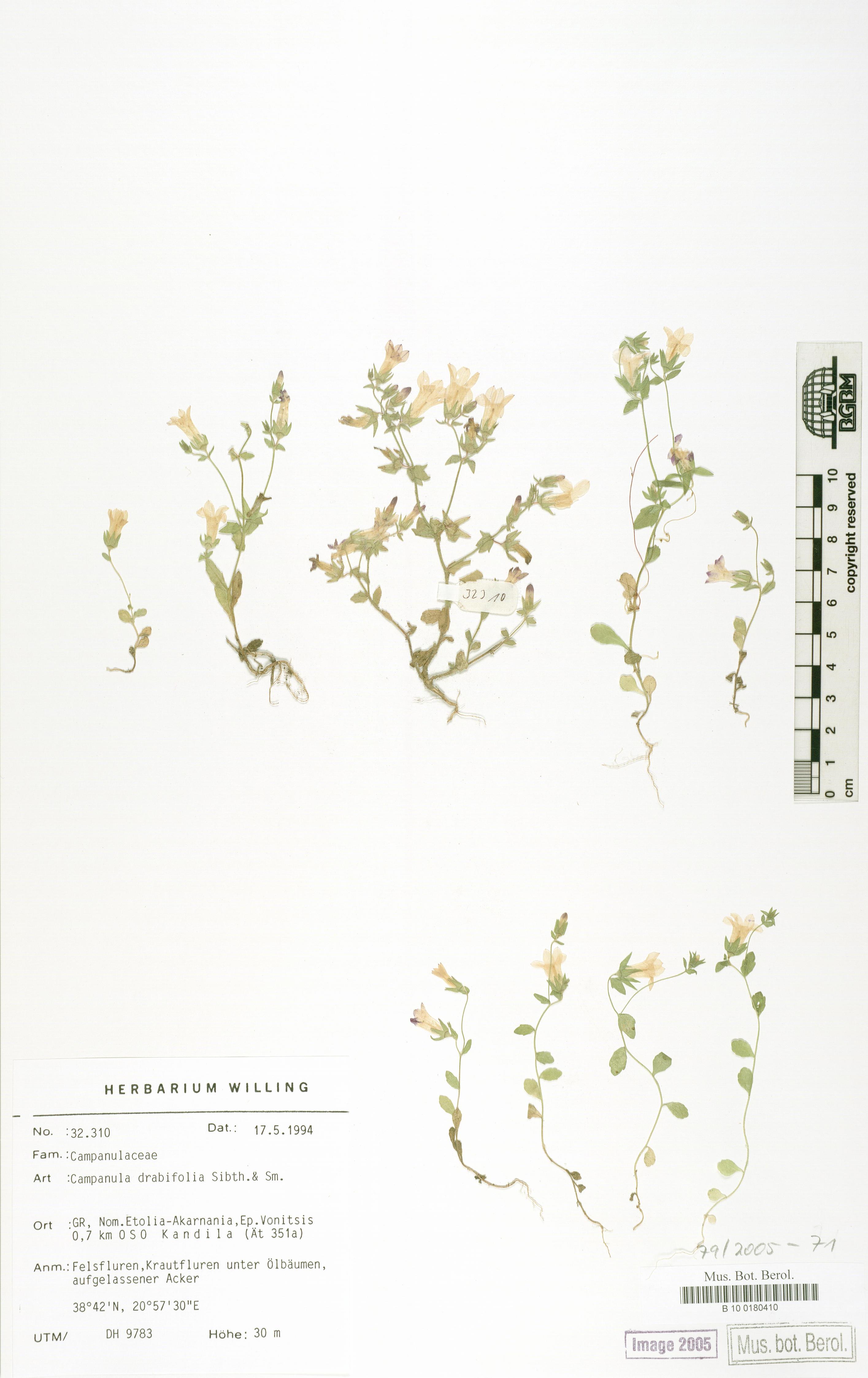 http://ww2.bgbm.org/herbarium/images/B/10/01/80/41/B_10_0180410.jpg