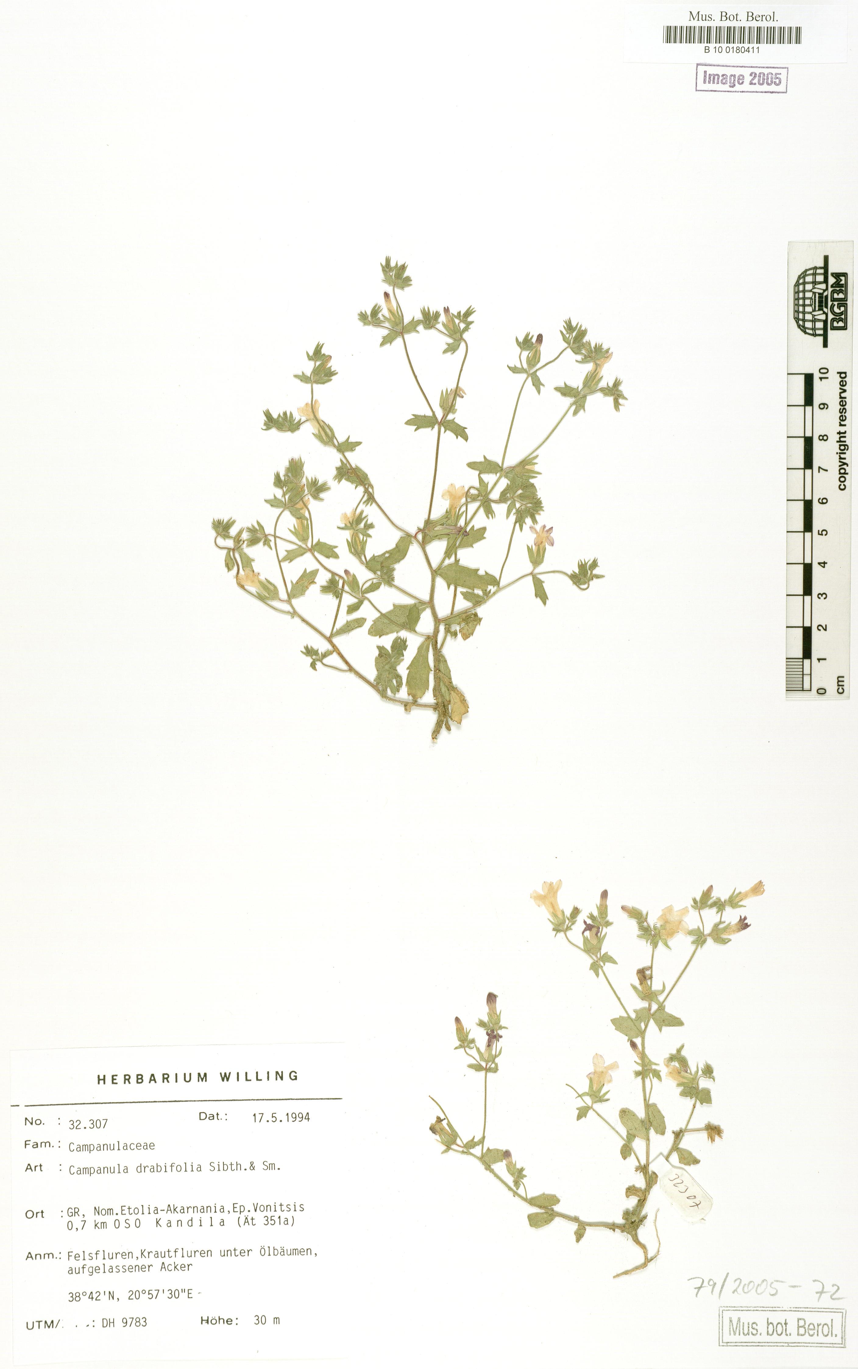 http://ww2.bgbm.org/herbarium/images/B/10/01/80/41/B_10_0180411.jpg
