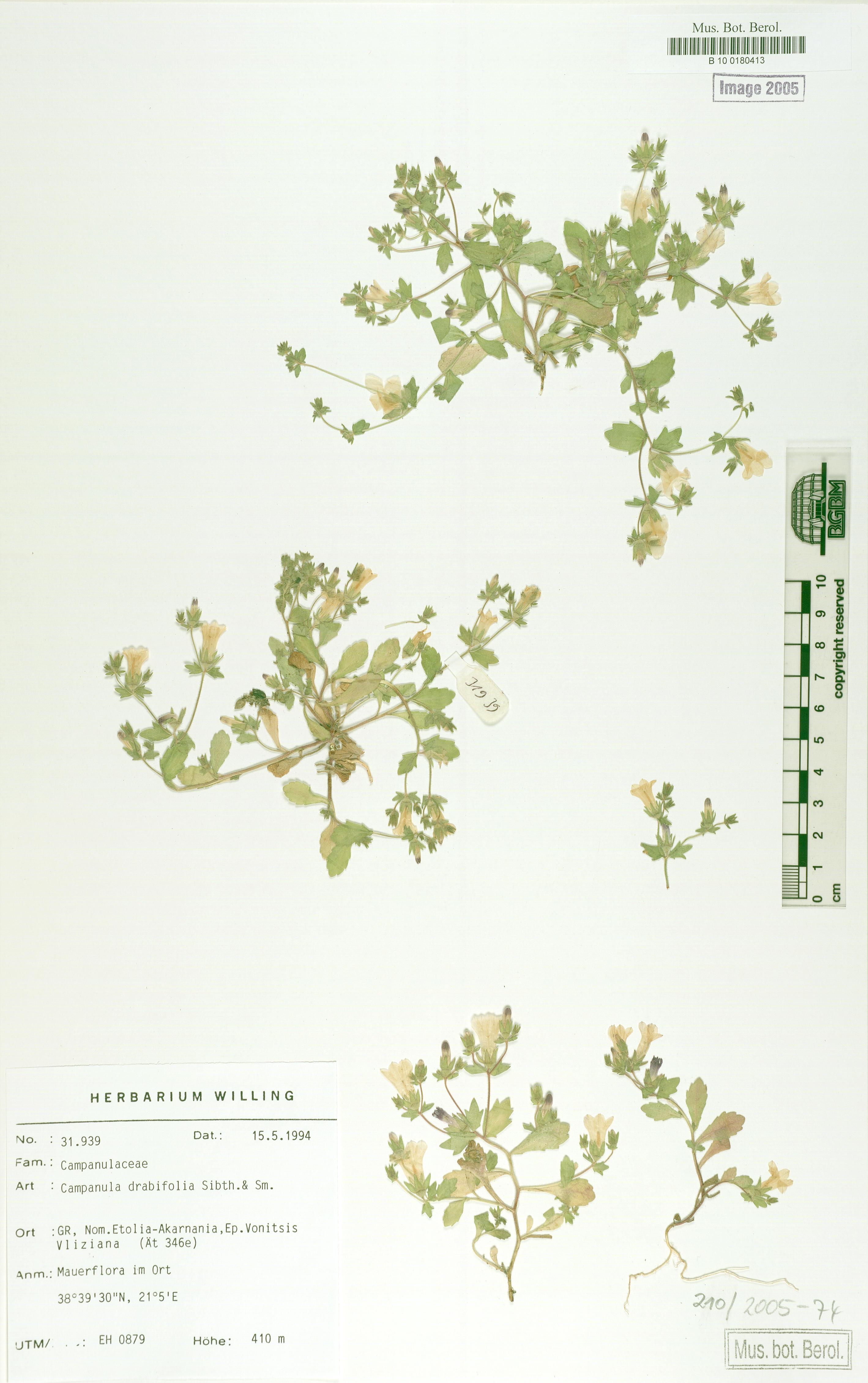 http://ww2.bgbm.org/herbarium/images/B/10/01/80/41/B_10_0180413.jpg