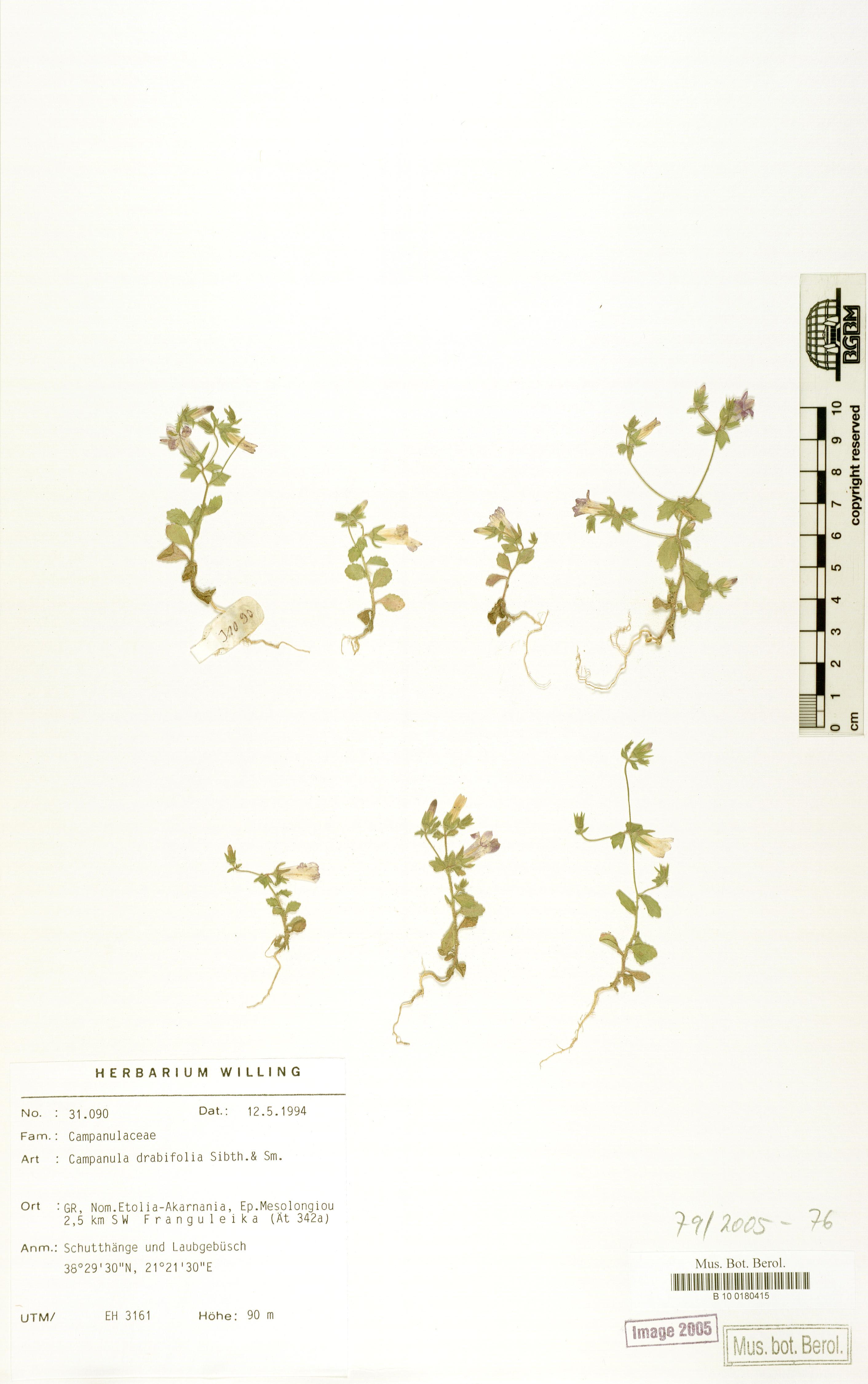 http://ww2.bgbm.org/herbarium/images/B/10/01/80/41/B_10_0180415.jpg