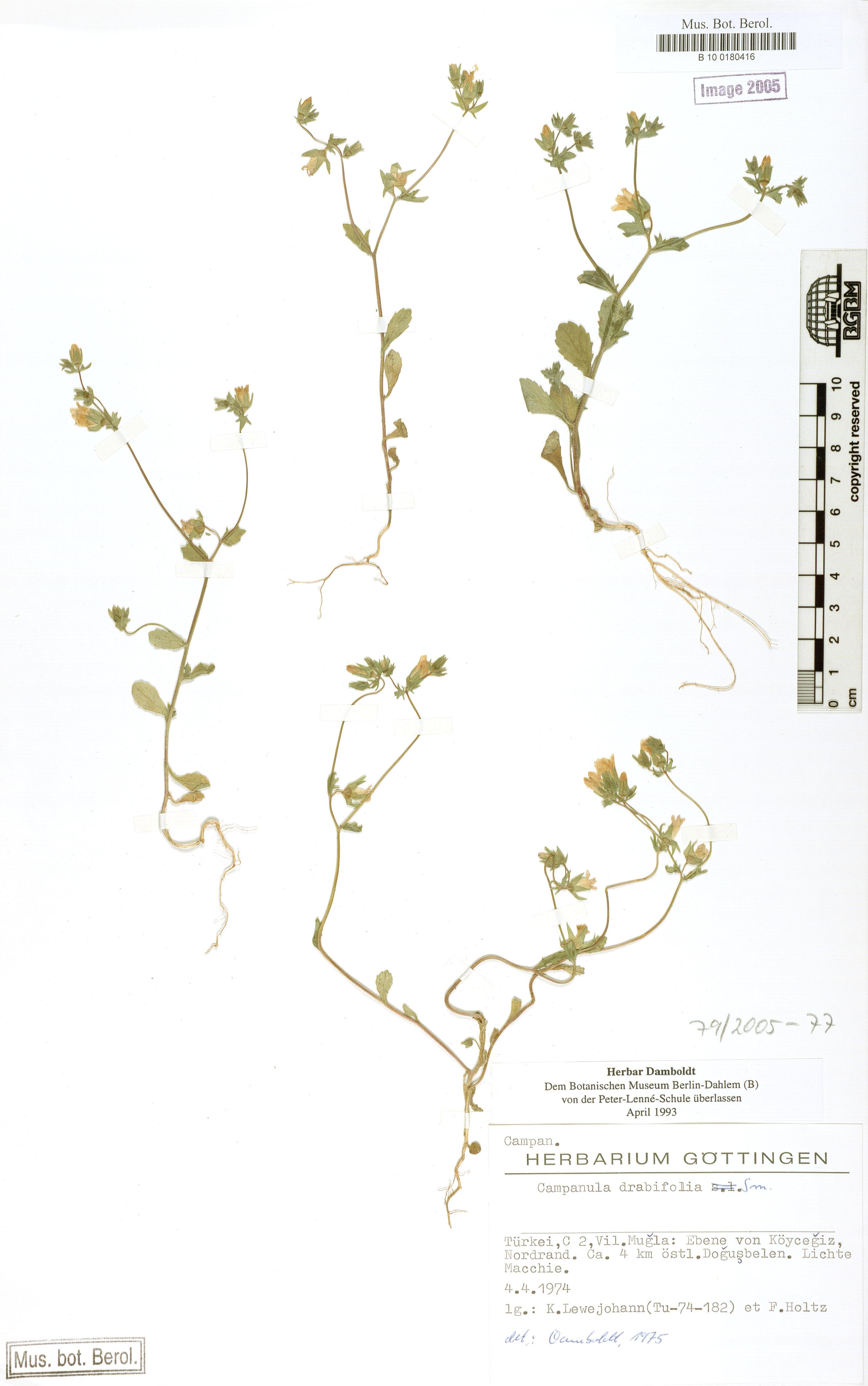 http://ww2.bgbm.org/herbarium/images/B/10/01/80/41/B_10_0180416.jpg