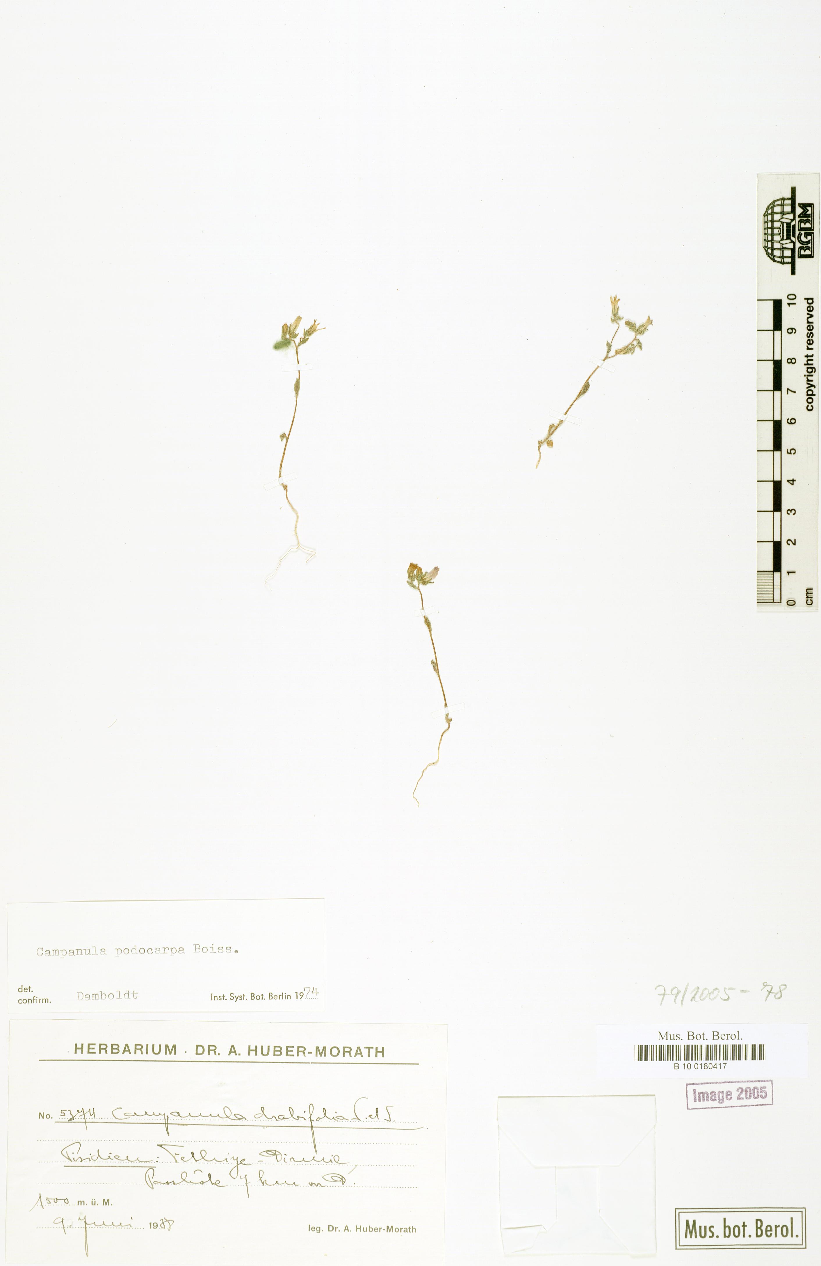 http://ww2.bgbm.org/herbarium/images/B/10/01/80/41/B_10_0180417.jpg