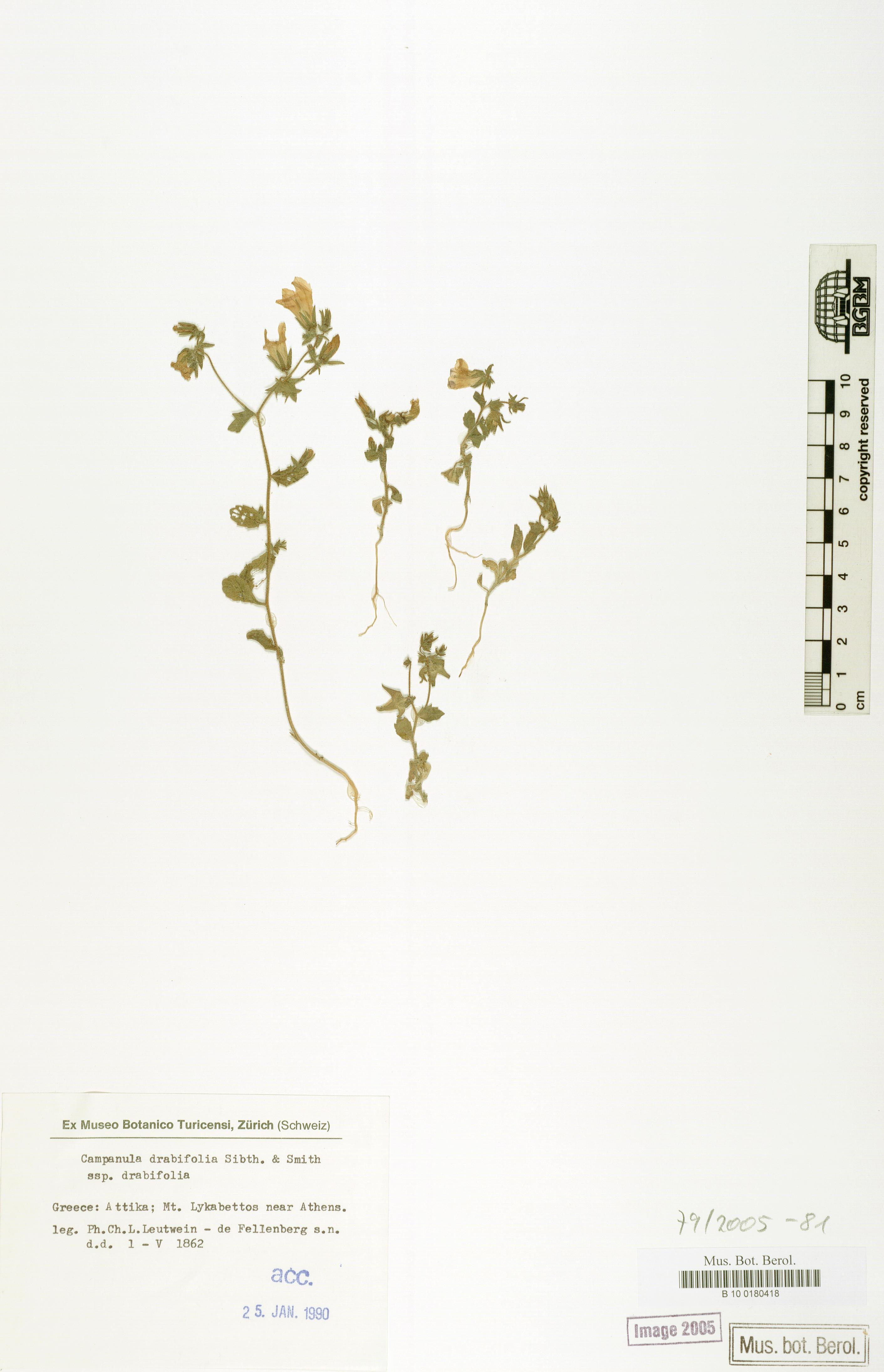 http://ww2.bgbm.org/herbarium/images/B/10/01/80/41/B_10_0180418.jpg