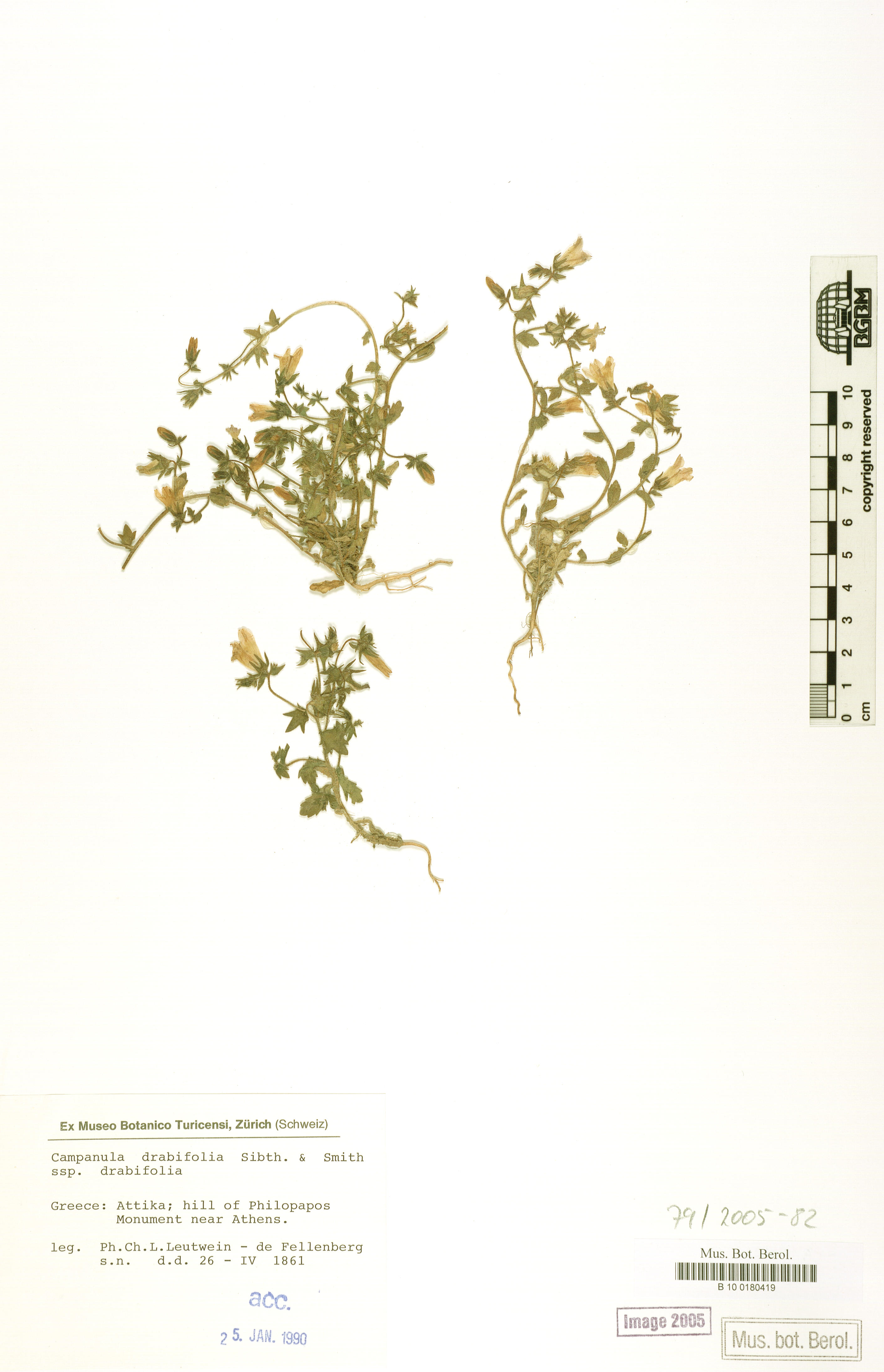 http://ww2.bgbm.org/herbarium/images/B/10/01/80/41/B_10_0180419.jpg