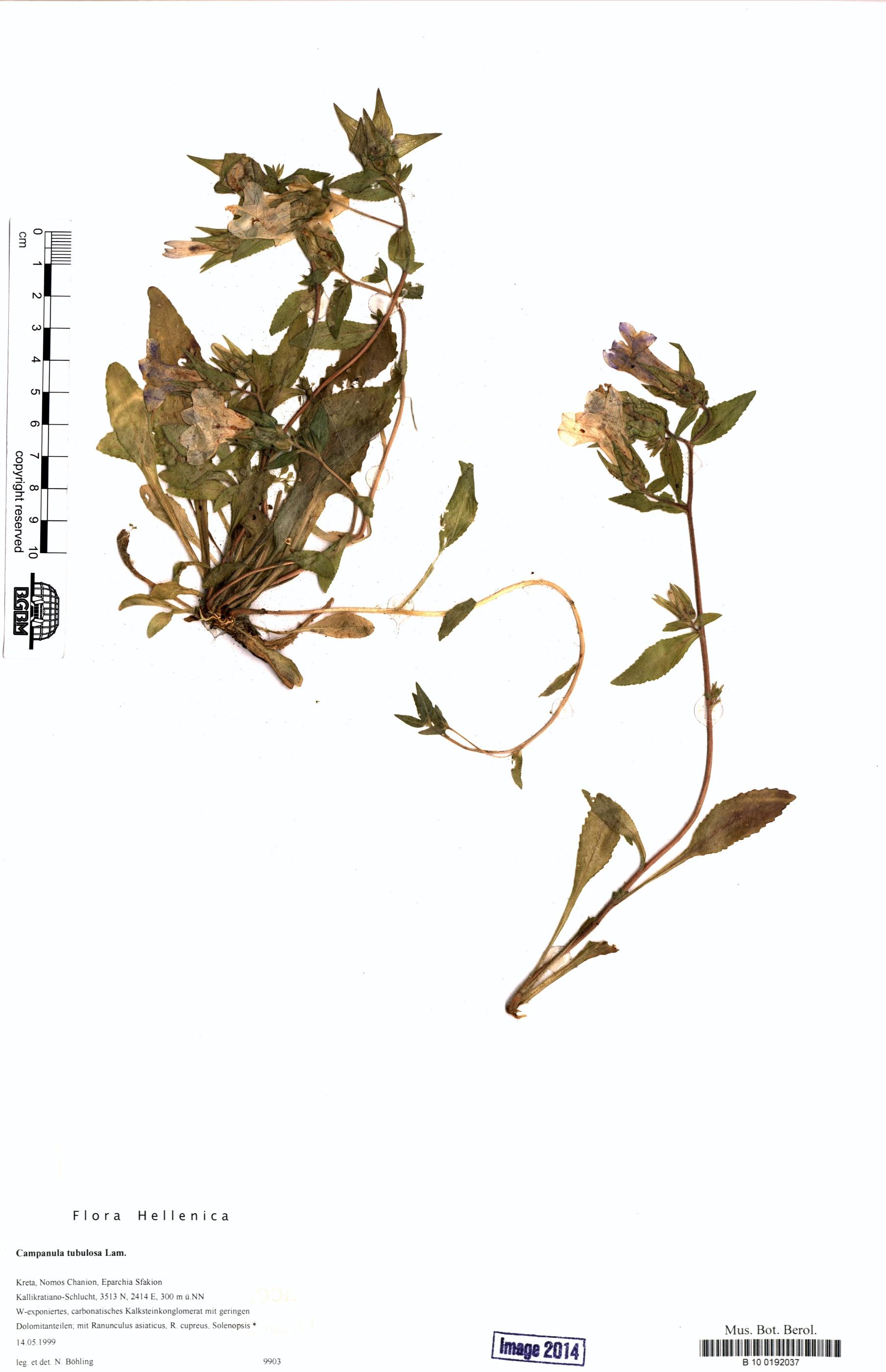 http://ww2.bgbm.org/herbarium/images/B/10/01/92/03/B_10_0192037.jpg