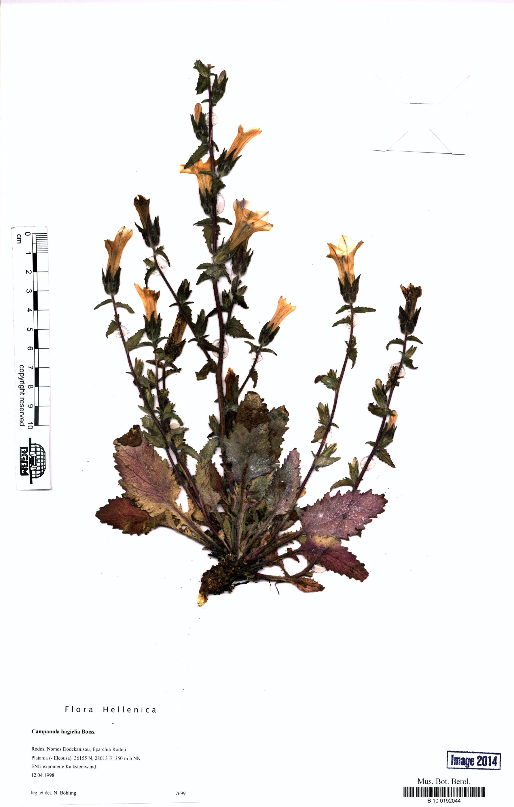 http://ww2.bgbm.org/herbarium/images/B/10/01/92/04/B_10_0192044.jpg