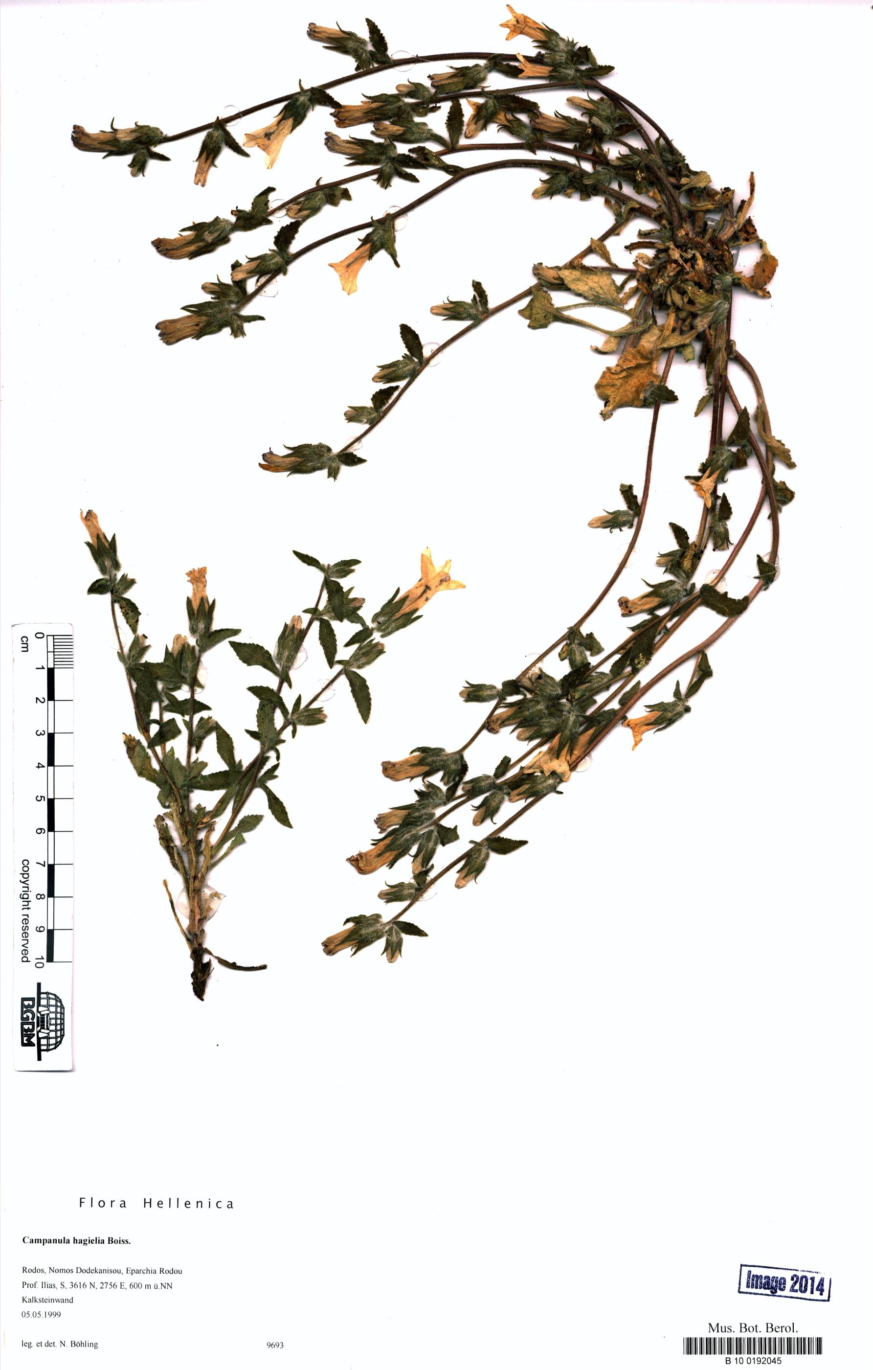 http://ww2.bgbm.org/herbarium/images/B/10/01/92/04/B_10_0192045.jpg