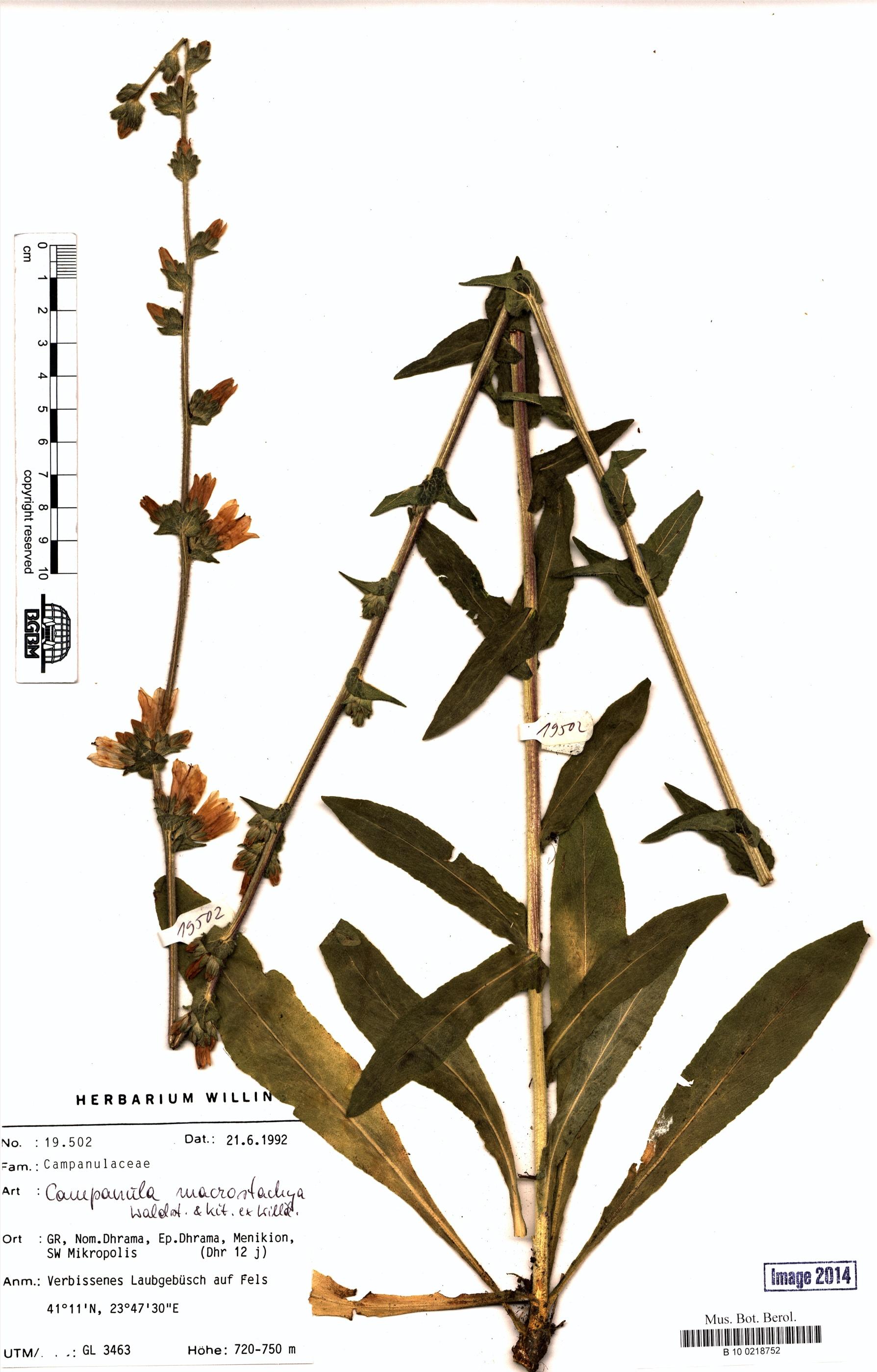 http://ww2.bgbm.org/herbarium/images/B/10/02/18/75/B_10_0218752.jpg