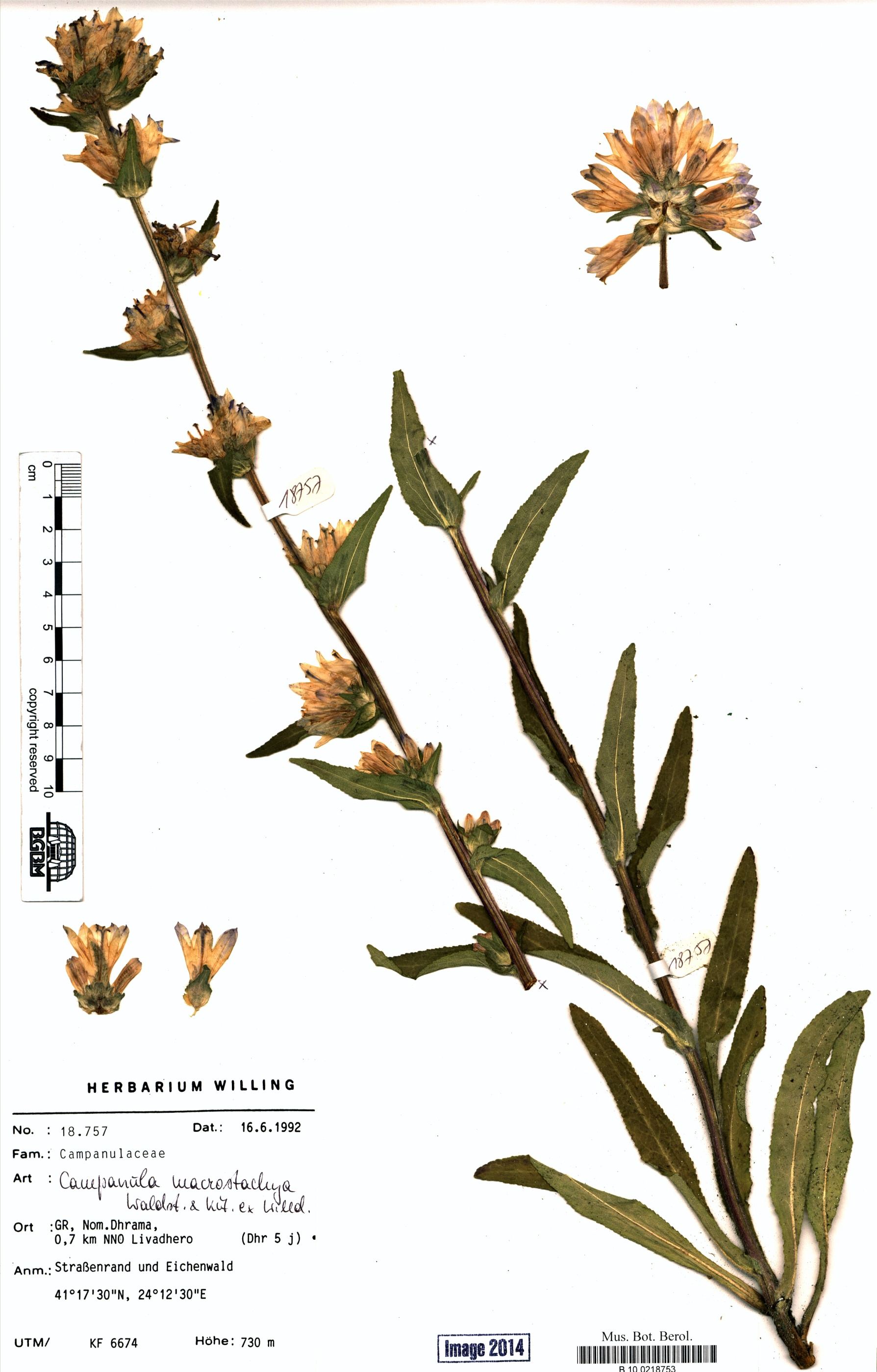 http://ww2.bgbm.org/herbarium/images/B/10/02/18/75/B_10_0218753.jpg