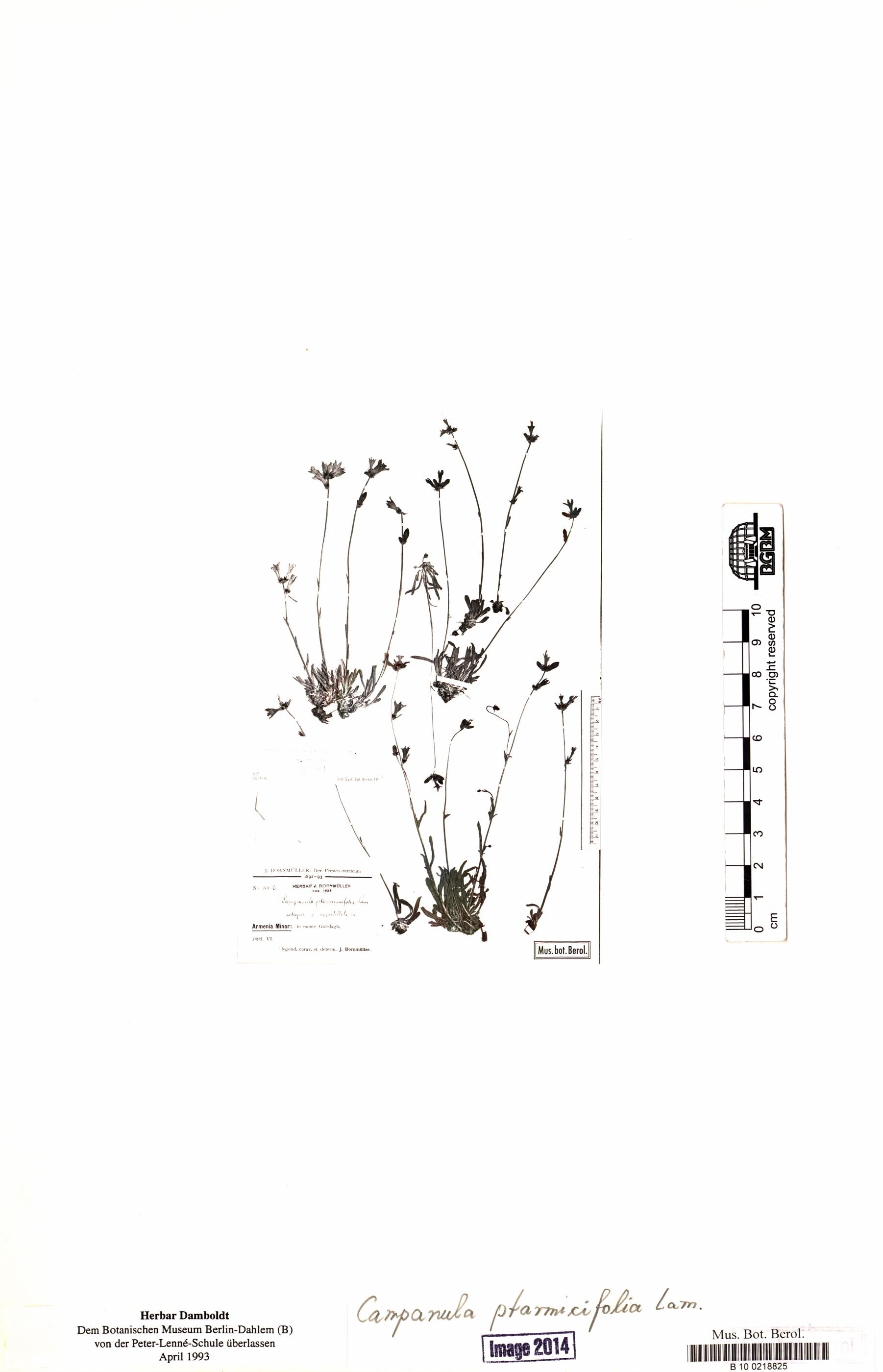 http://ww2.bgbm.org/herbarium/images/B/10/02/18/82/B_10_0218825.jpg