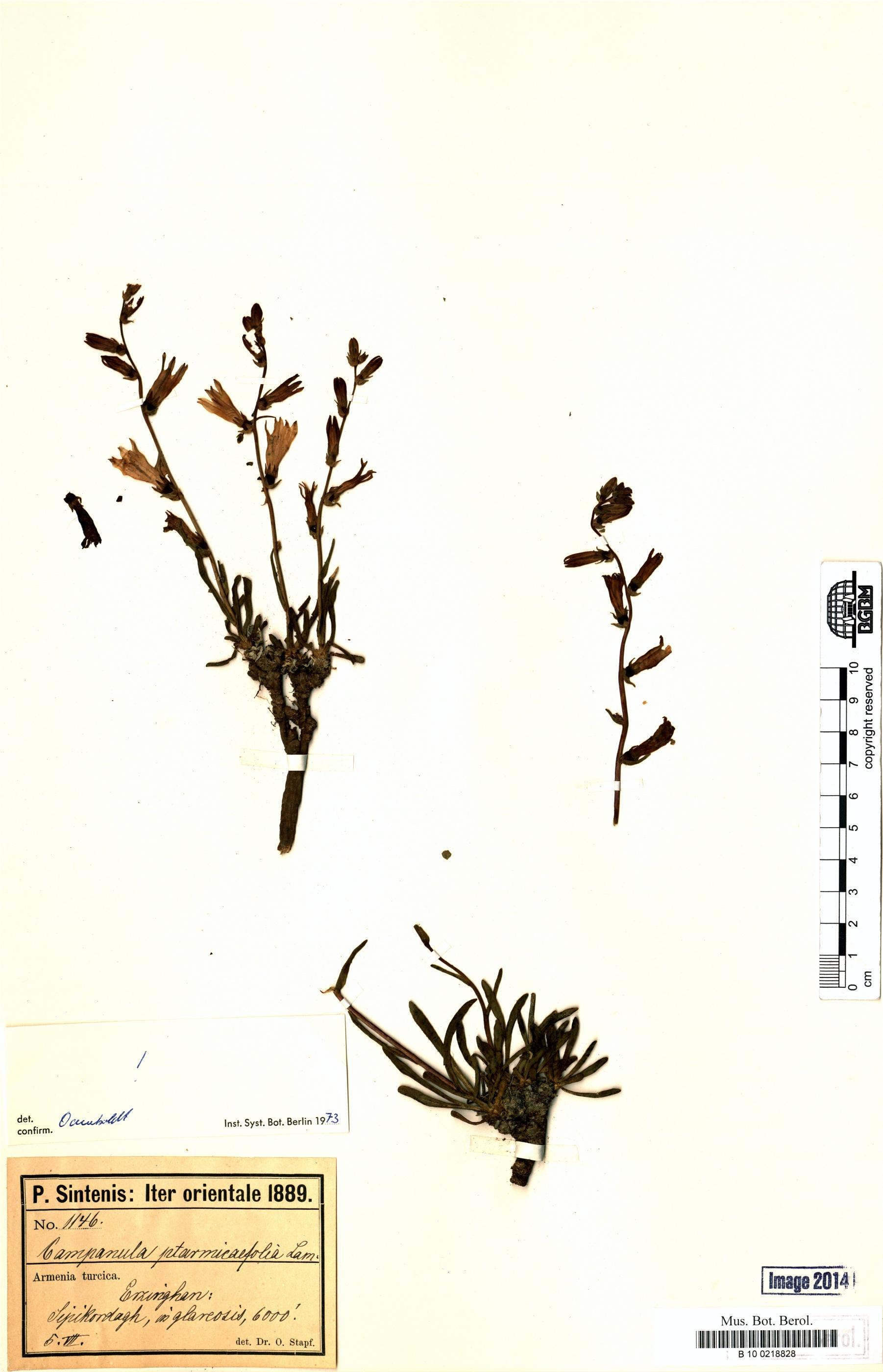 http://ww2.bgbm.org/herbarium/images/B/10/02/18/82/B_10_0218828.jpg