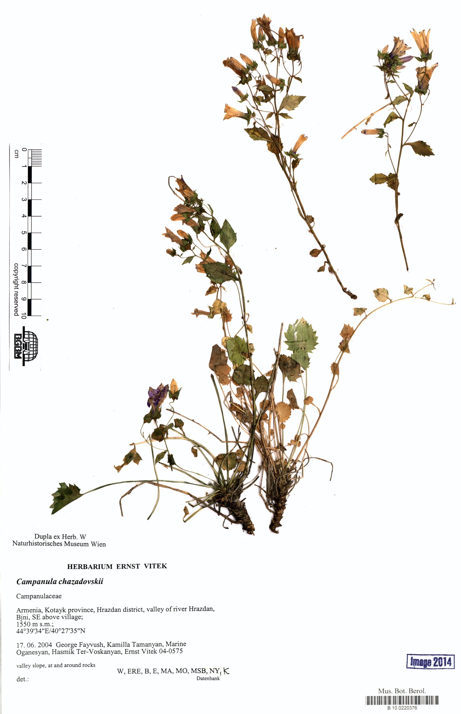 http://ww2.bgbm.org/herbarium/images/B/10/02/20/37/B_10_0220376.jpg