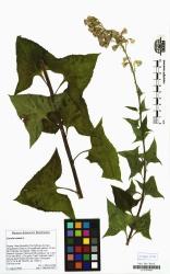herbar scan