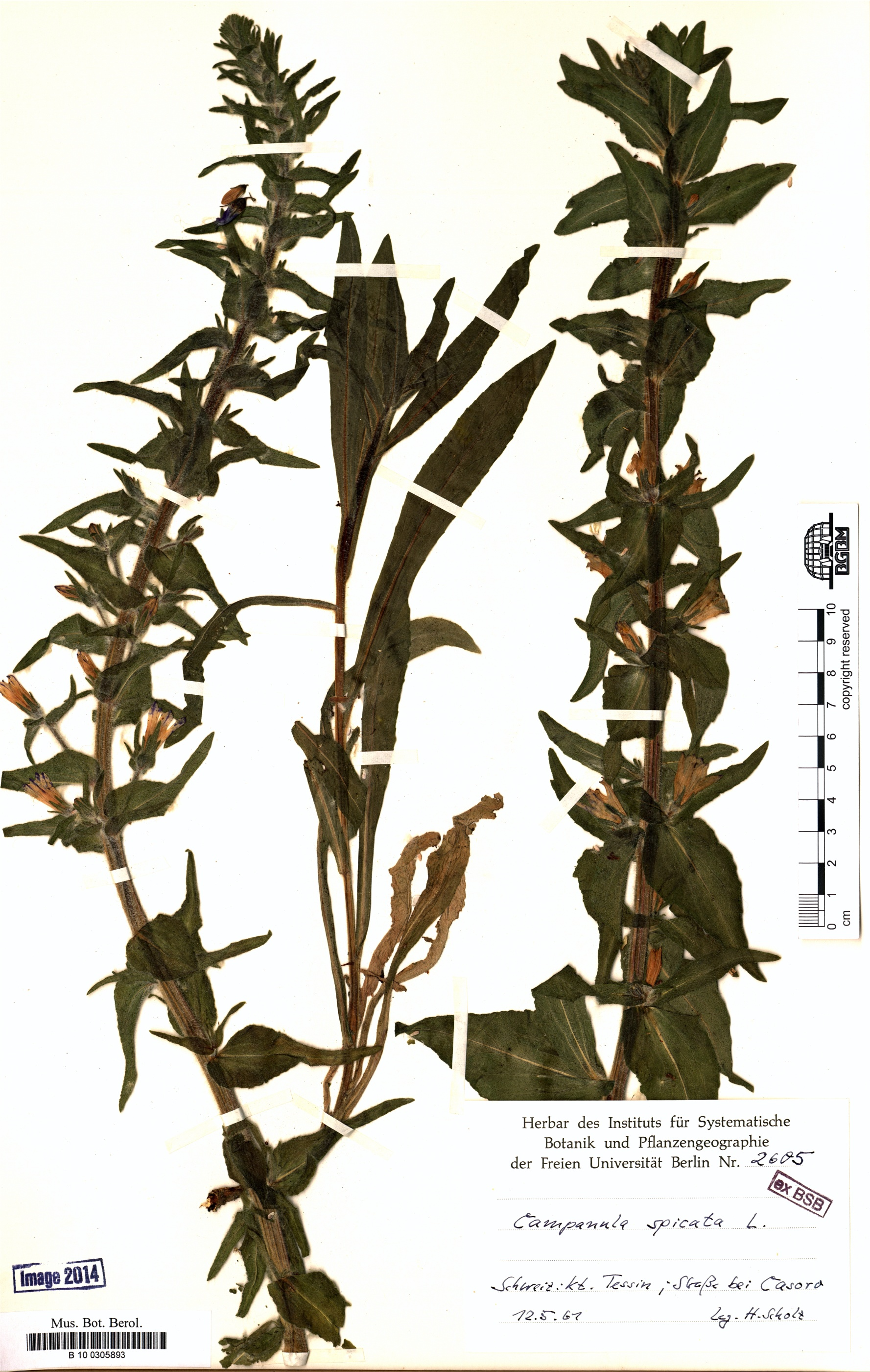 http://ww2.bgbm.org/herbarium/images/B/10/03/05/89/B_10_0305893.jpg