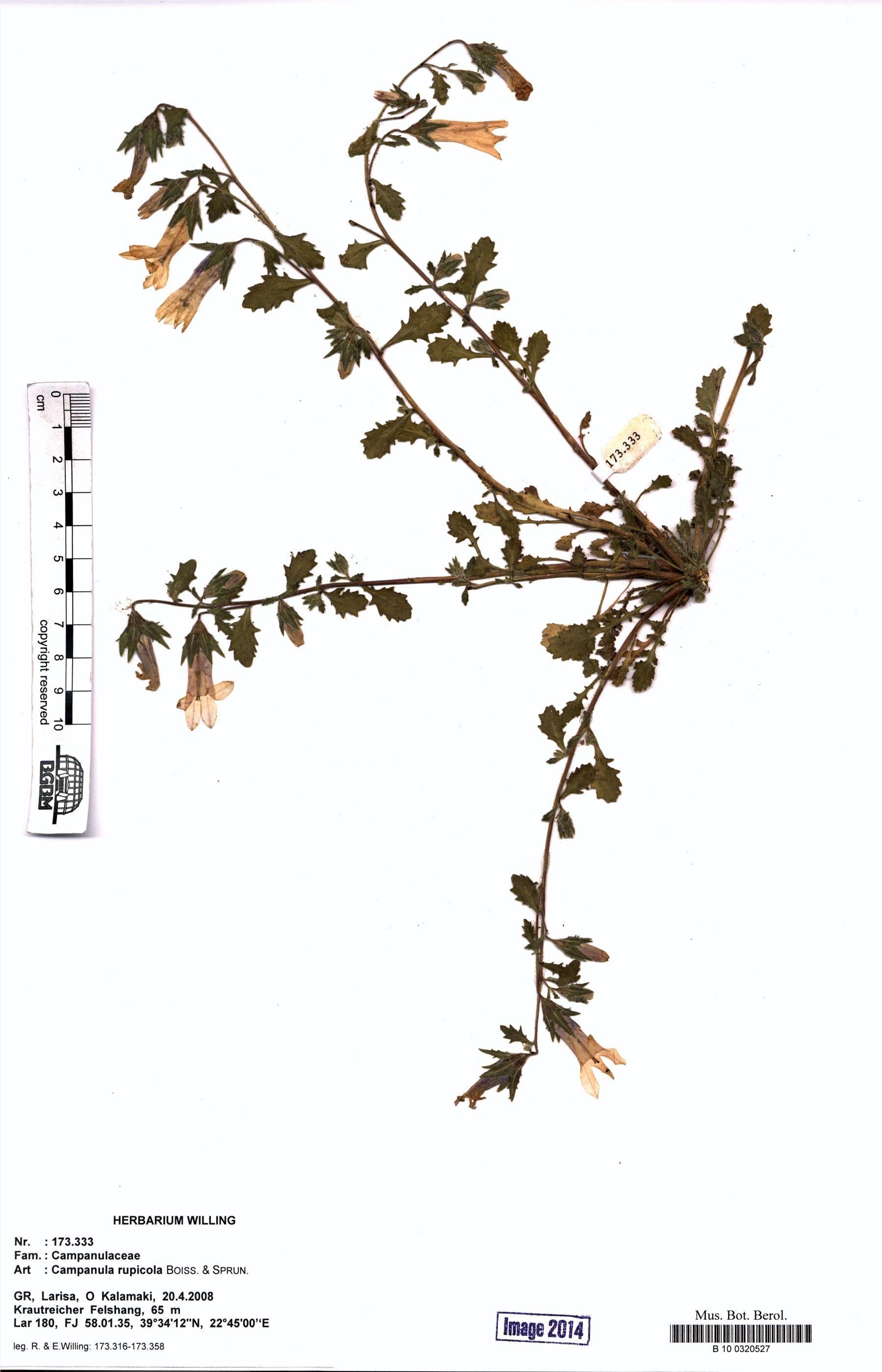 http://ww2.bgbm.org/herbarium/images/B/10/03/20/52/B_10_0320527.jpg