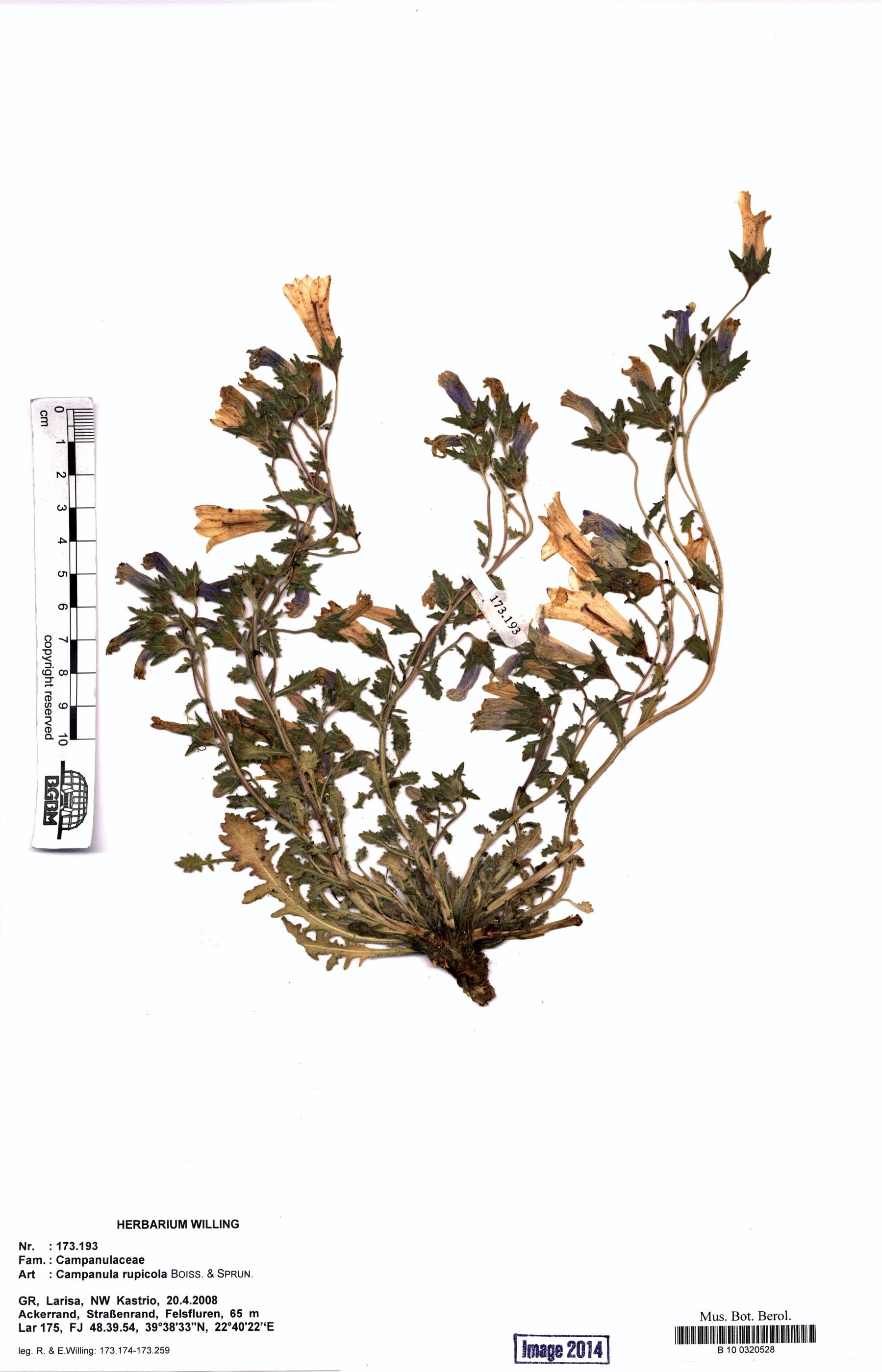 http://ww2.bgbm.org/herbarium/images/B/10/03/20/52/B_10_0320528.jpg