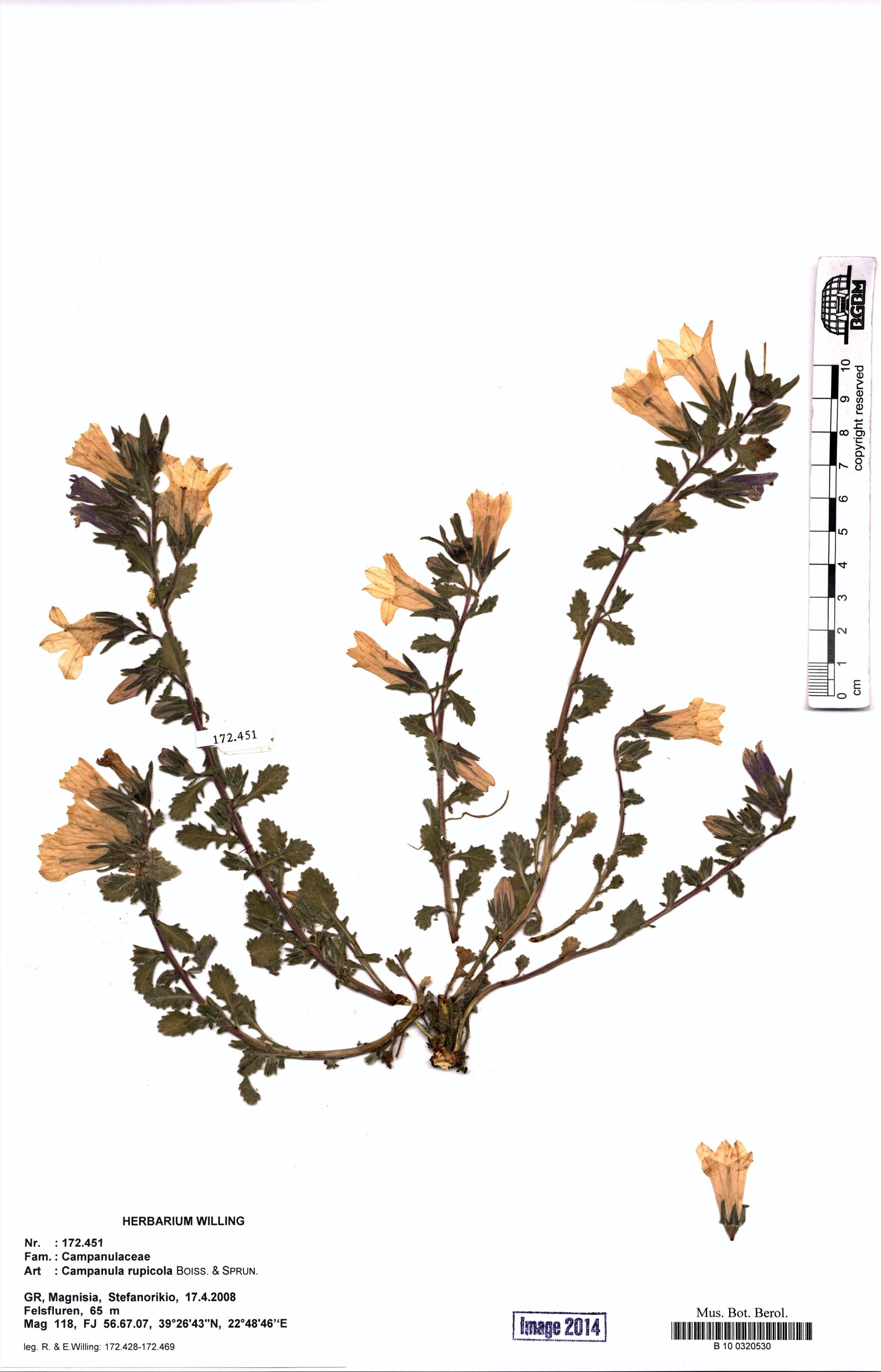 http://ww2.bgbm.org/herbarium/images/B/10/03/20/53/B_10_0320530.jpg