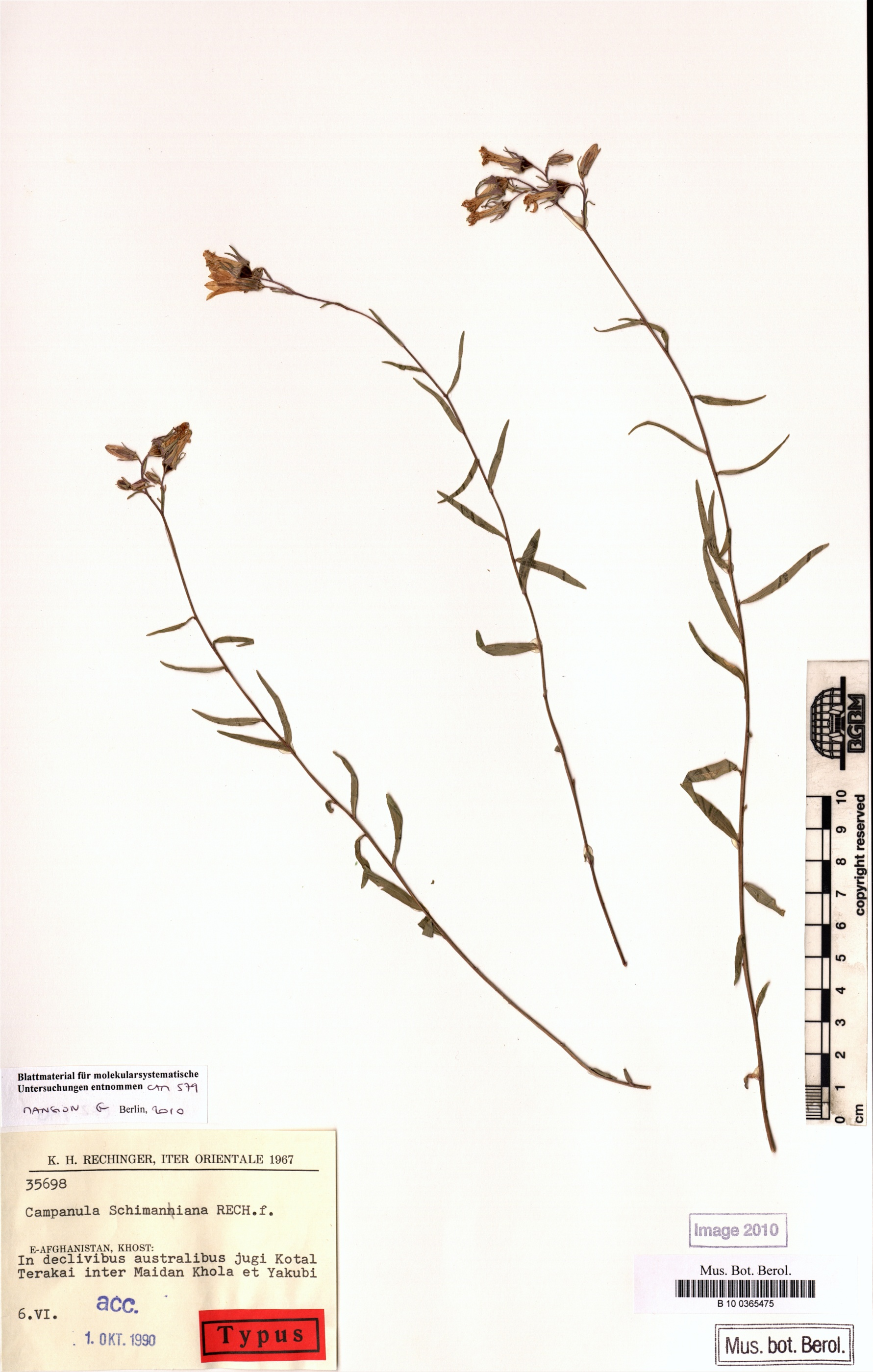 http://ww2.bgbm.org/herbarium/images/B/10/03/65/47/b_10_0365475.jpg