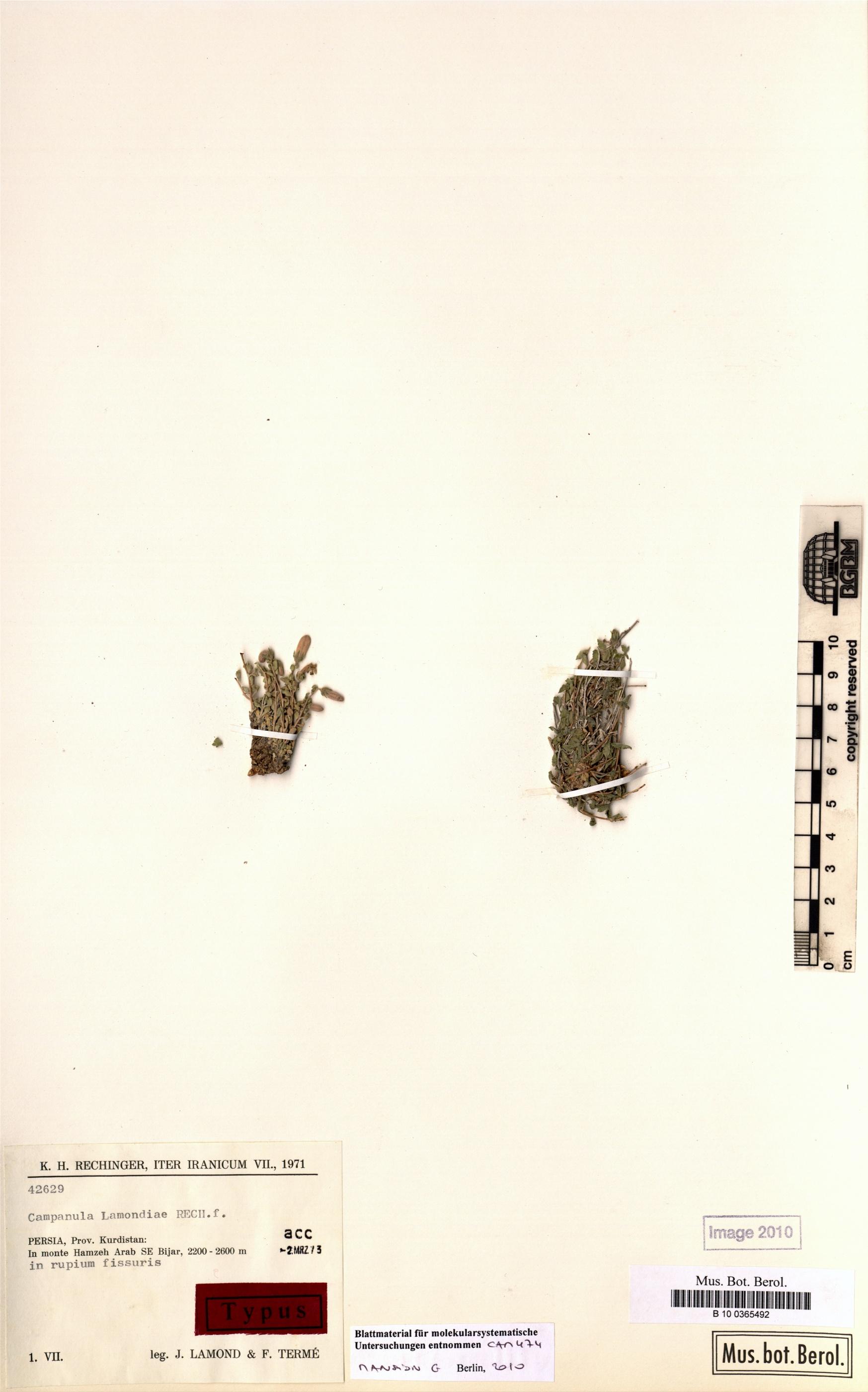http://ww2.bgbm.org/herbarium/images/B/10/03/65/49/b_10_0365492.jpg