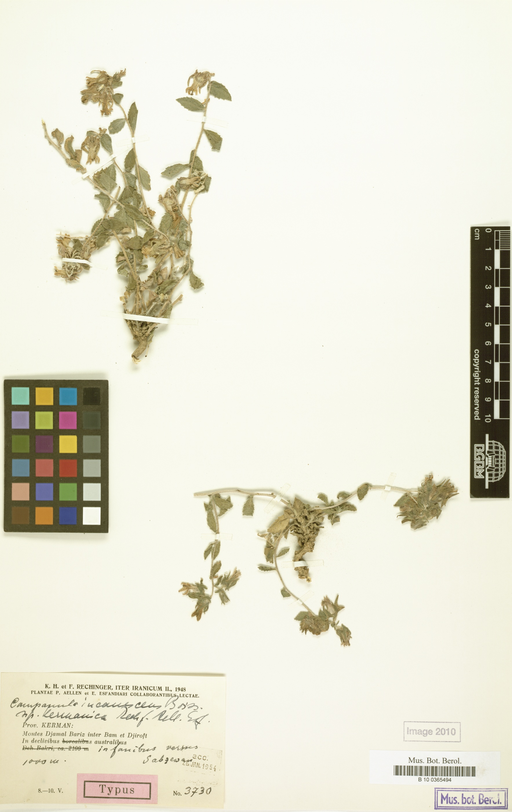 http://ww2.bgbm.org/herbarium/images/B/10/03/65/49/b_10_0365494.jpg