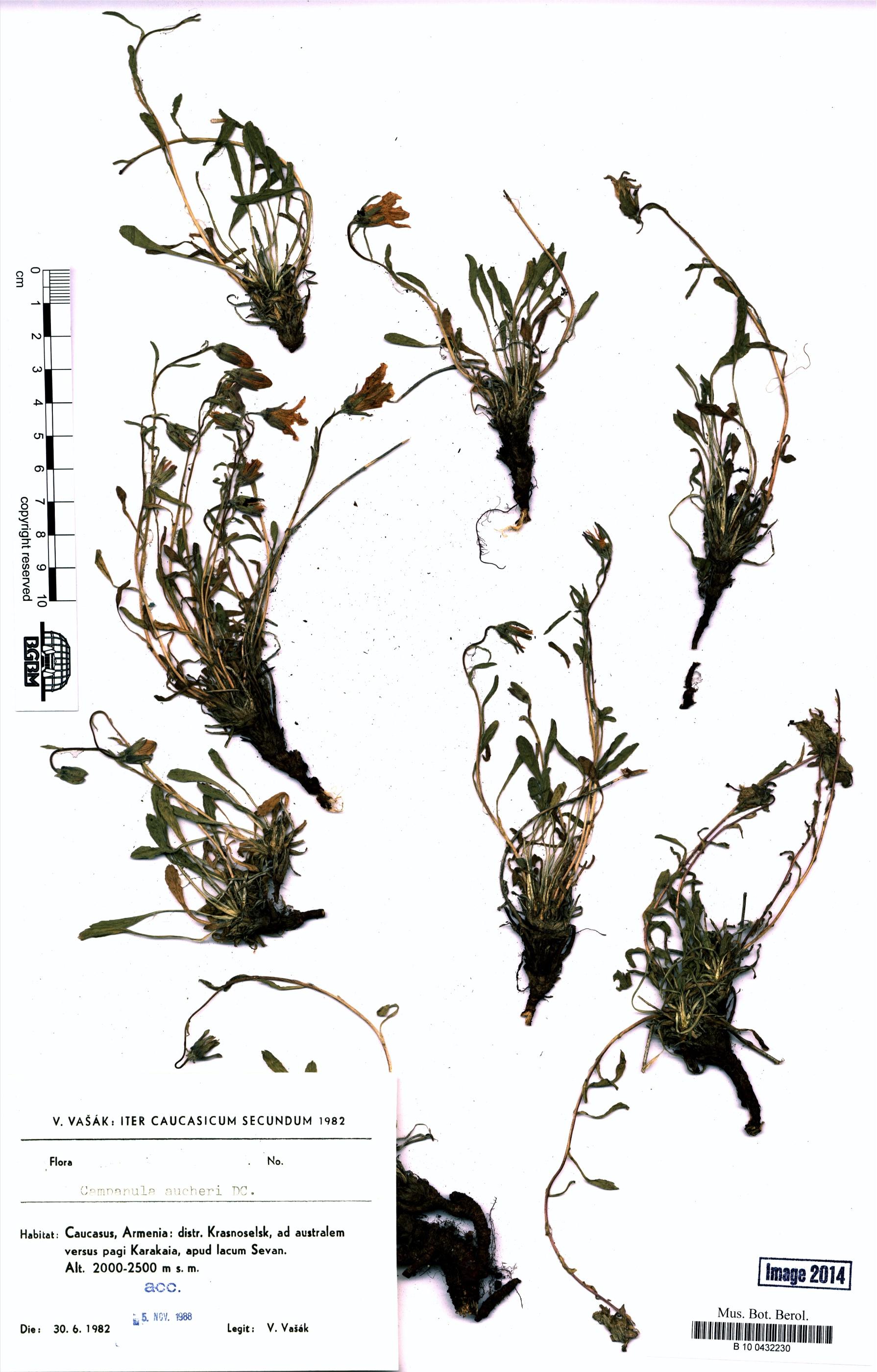 http://ww2.bgbm.org/herbarium/images/B/10/04/32/23/B_10_0432230.jpg