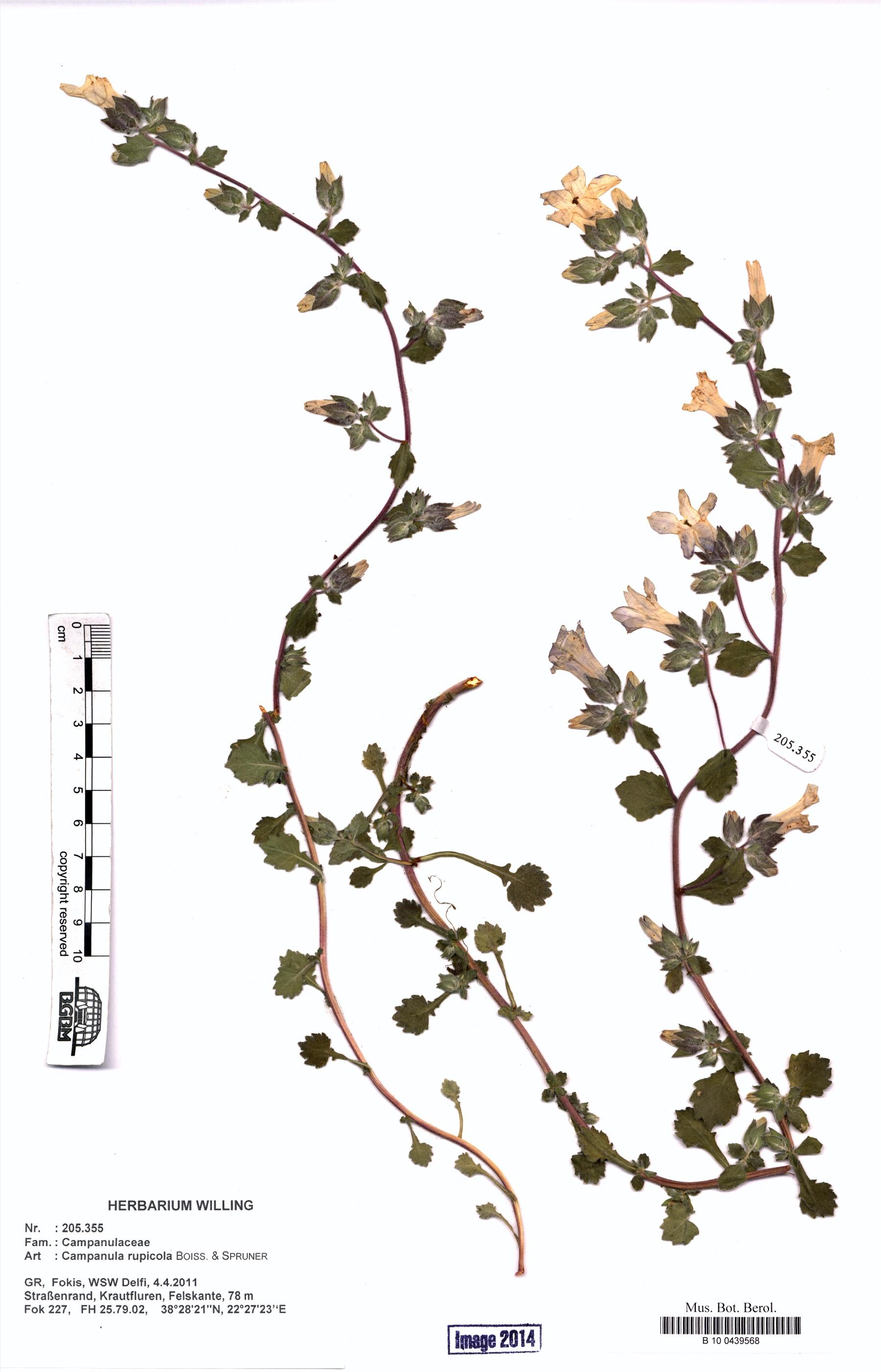 http://ww2.bgbm.org/herbarium/images/B/10/04/39/56/B_10_0439568.jpg