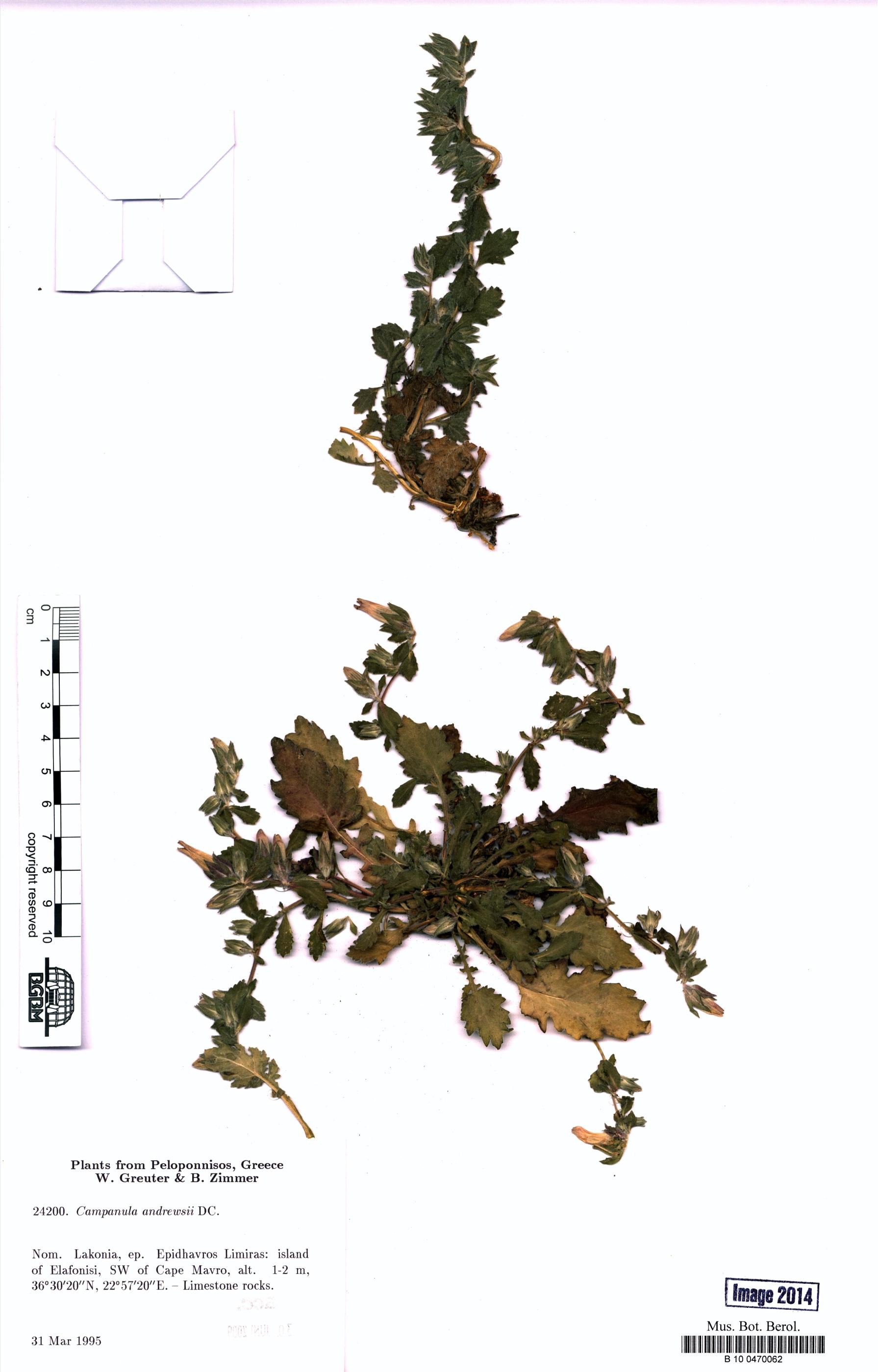 http://ww2.bgbm.org/herbarium/images/B/10/04/70/06/B_10_0470062.jpg