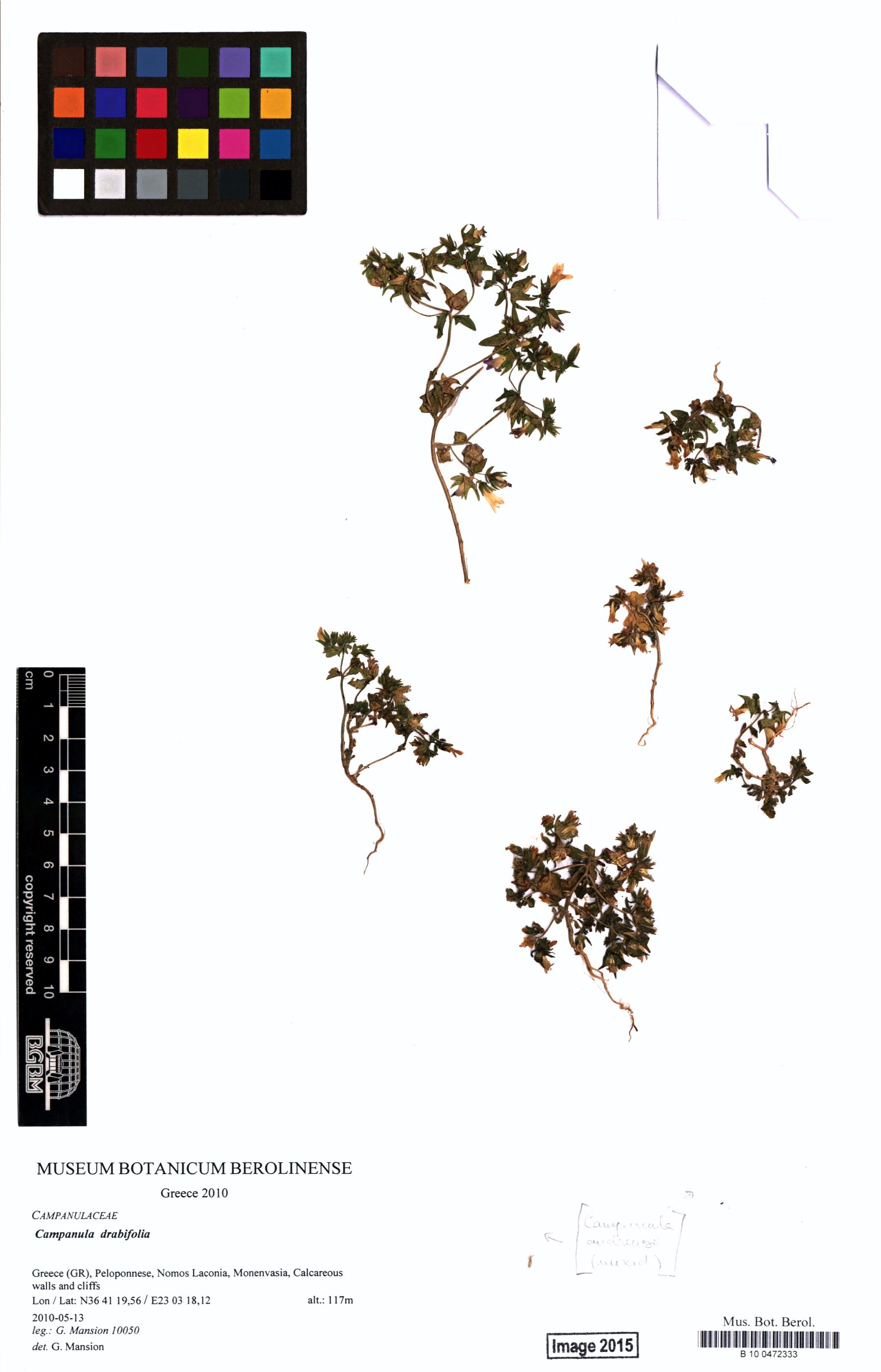 http://ww2.bgbm.org/herbarium/images/B/10/04/72/33/B_10_0472333.jpg