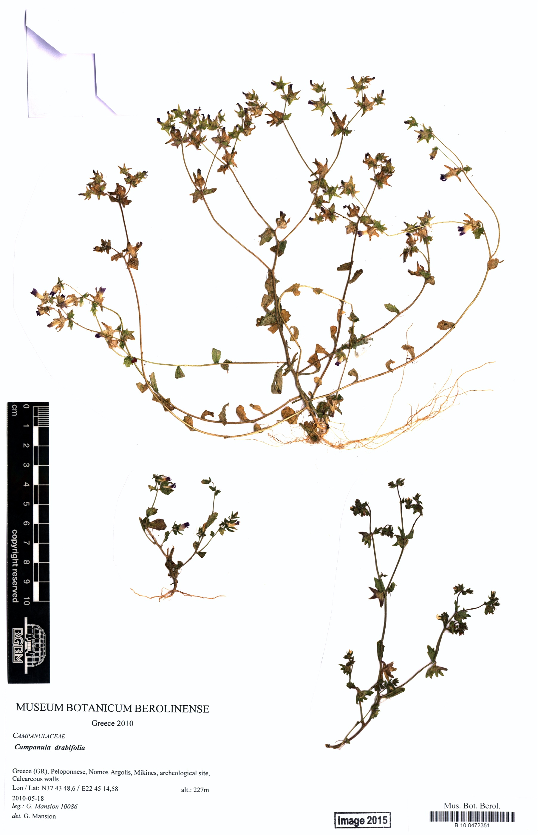 http://ww2.bgbm.org/herbarium/images/B/10/04/72/35/B_10_0472351.jpg