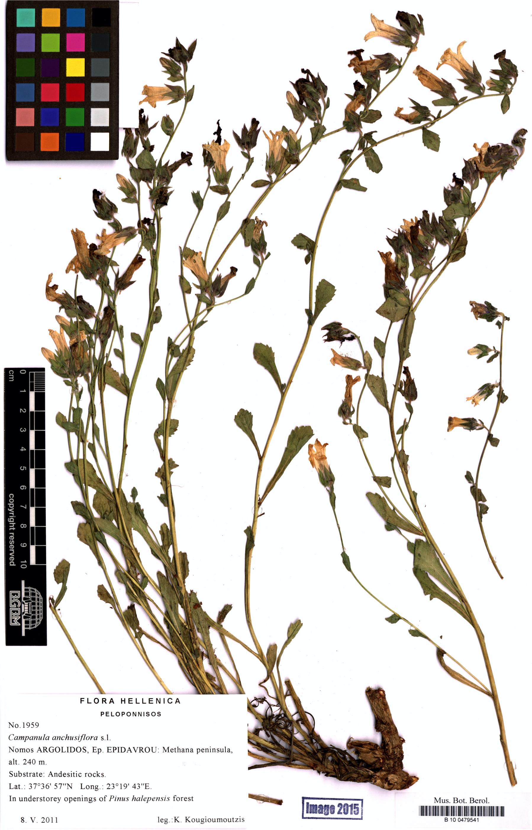 http://ww2.bgbm.org/herbarium/images/B/10/04/79/54/B_10_0479541.jpg