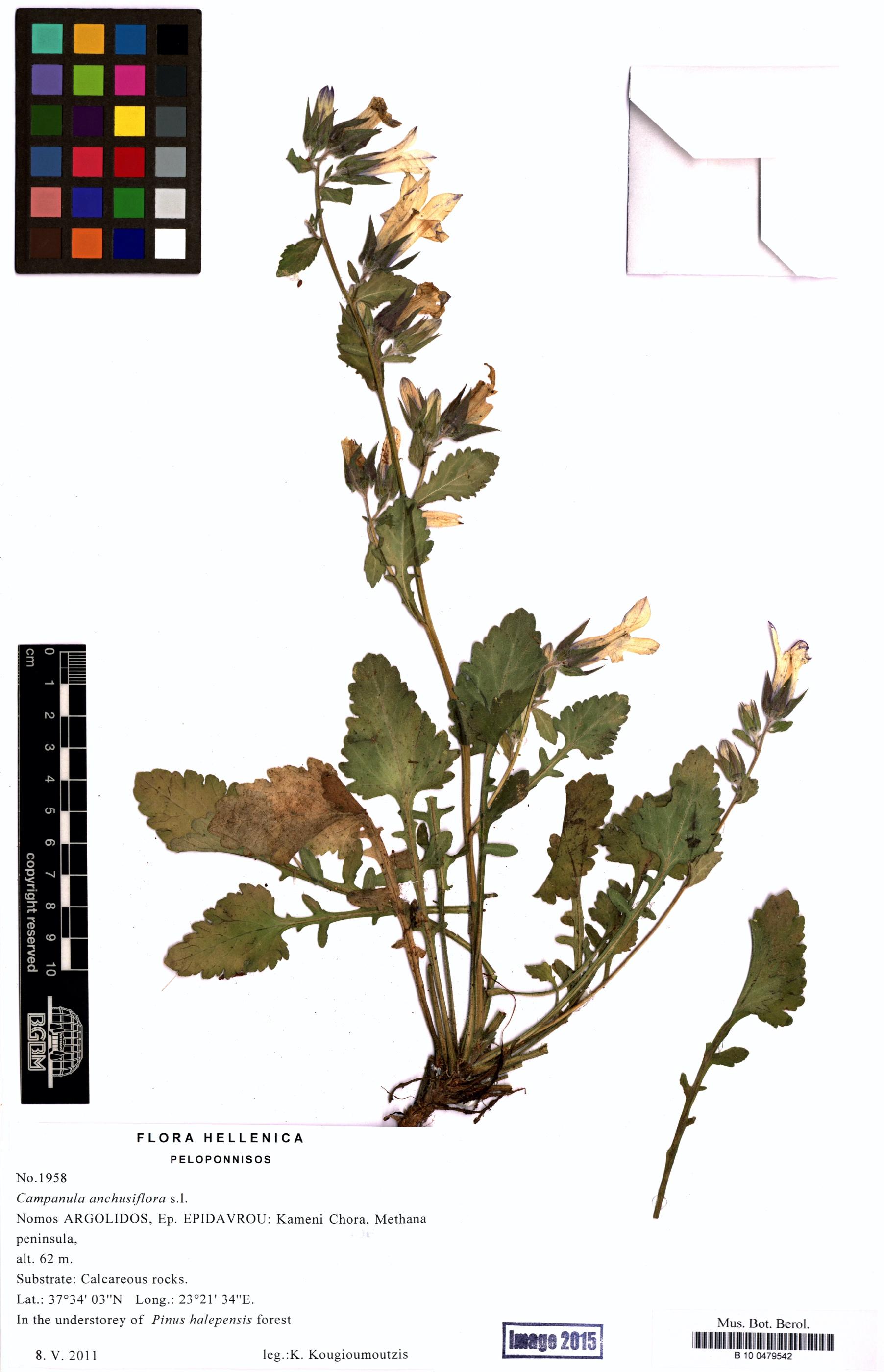 http://ww2.bgbm.org/herbarium/images/B/10/04/79/54/B_10_0479542.jpg