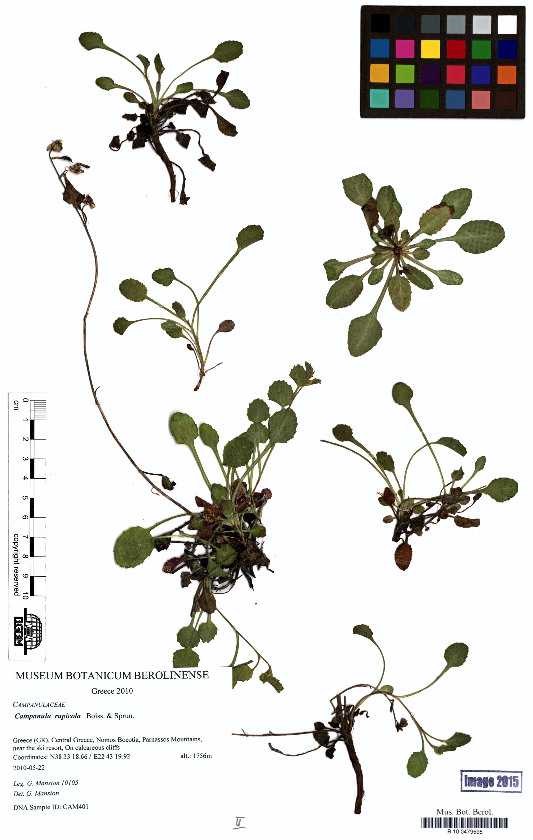 http://ww2.bgbm.org/herbarium/images/B/10/04/79/59/B_10_0479595.jpg