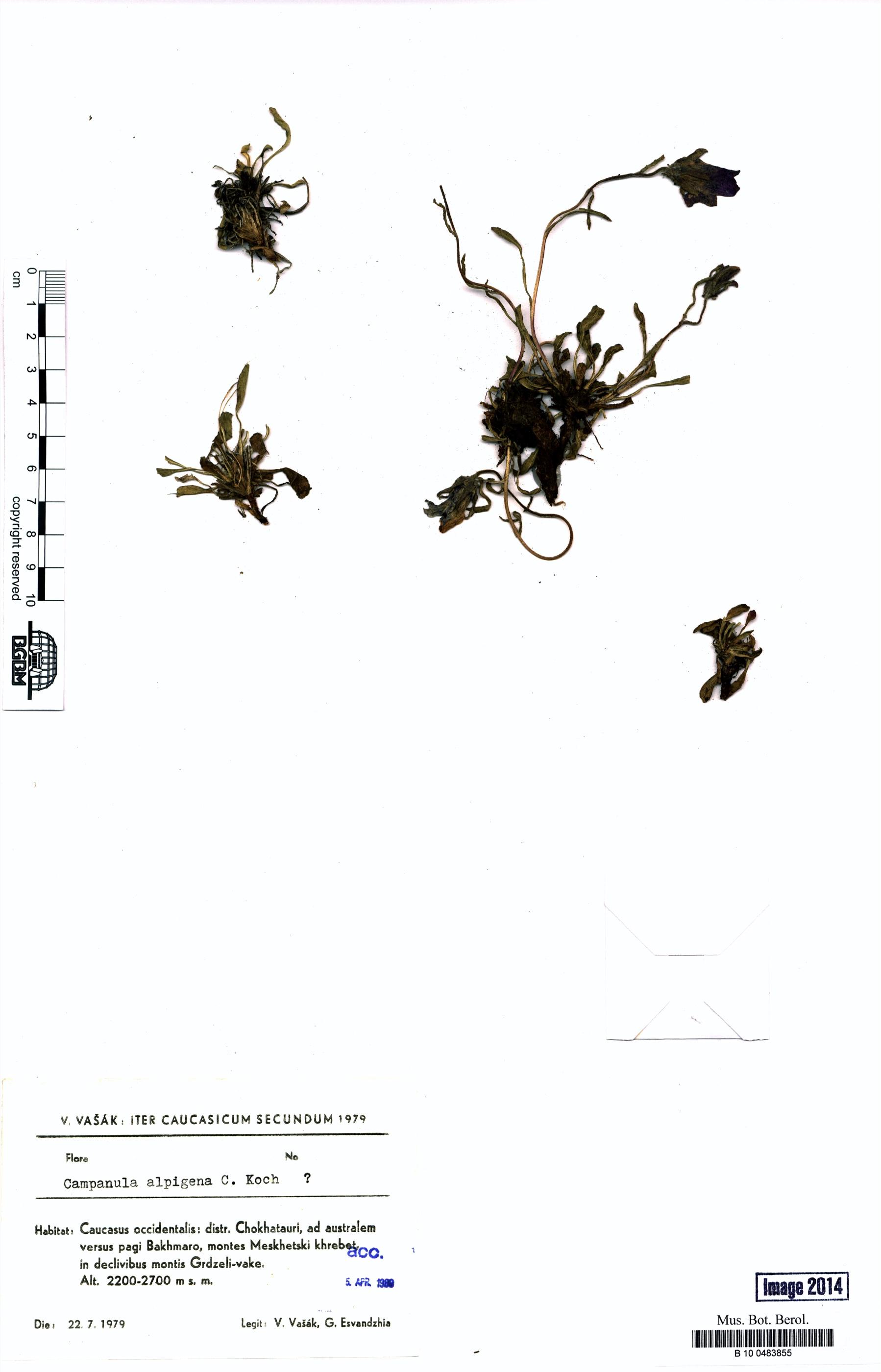 http://ww2.bgbm.org/herbarium/images/B/10/04/83/85/B_10_0483855.jpg