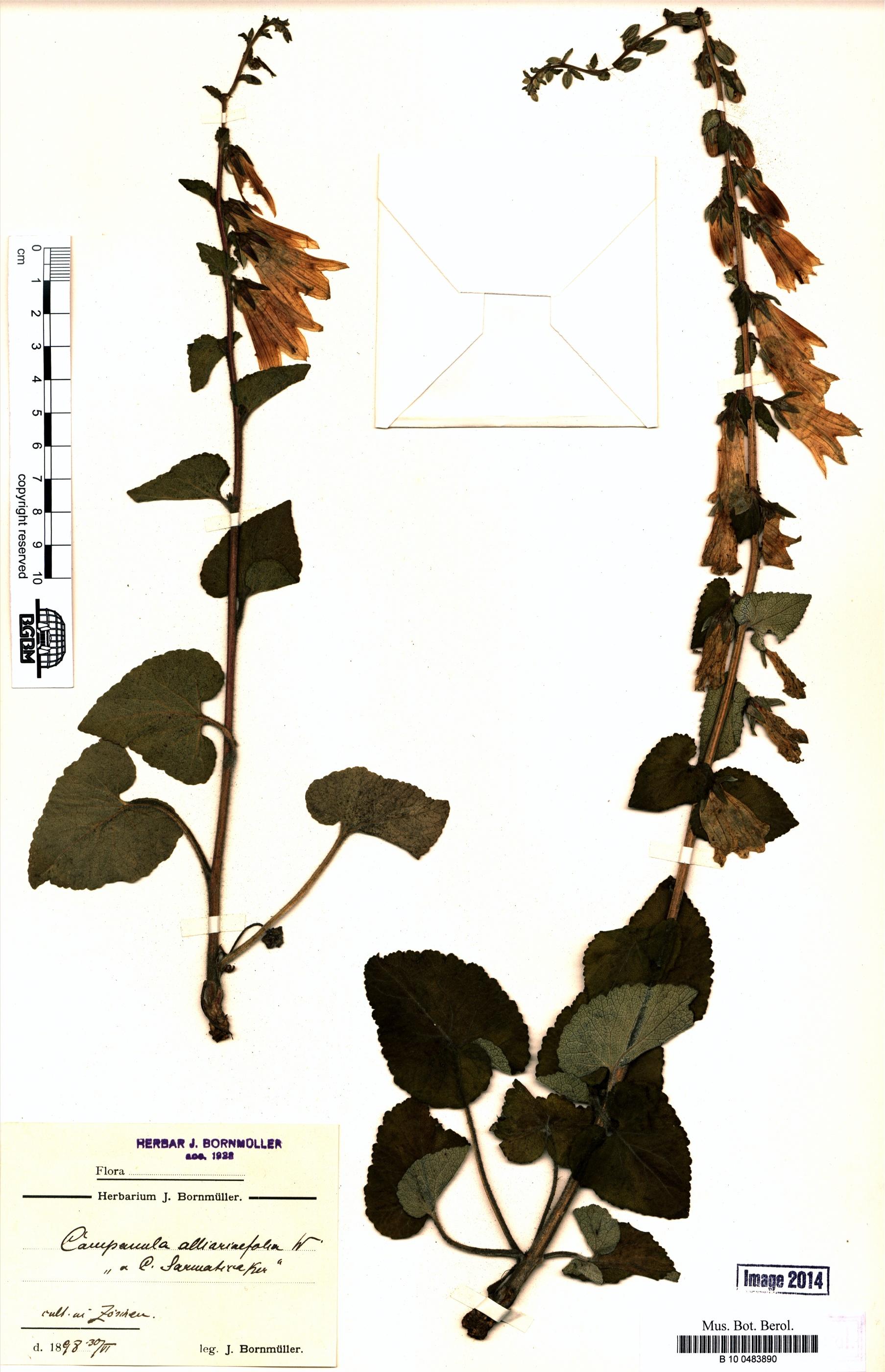 http://ww2.bgbm.org/herbarium/images/B/10/04/83/89/B_10_0483890.jpg