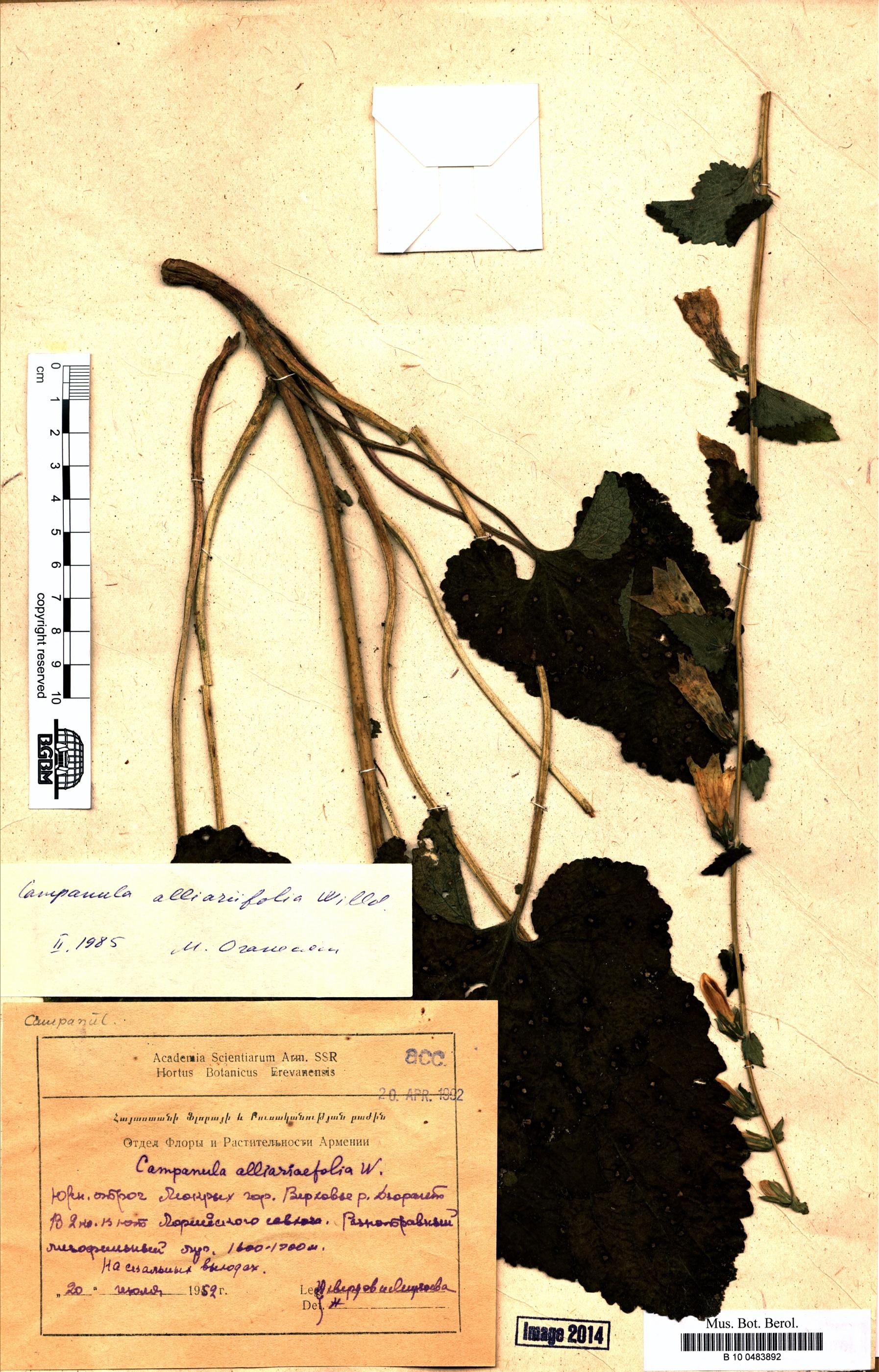 http://ww2.bgbm.org/herbarium/images/B/10/04/83/89/B_10_0483892.jpg