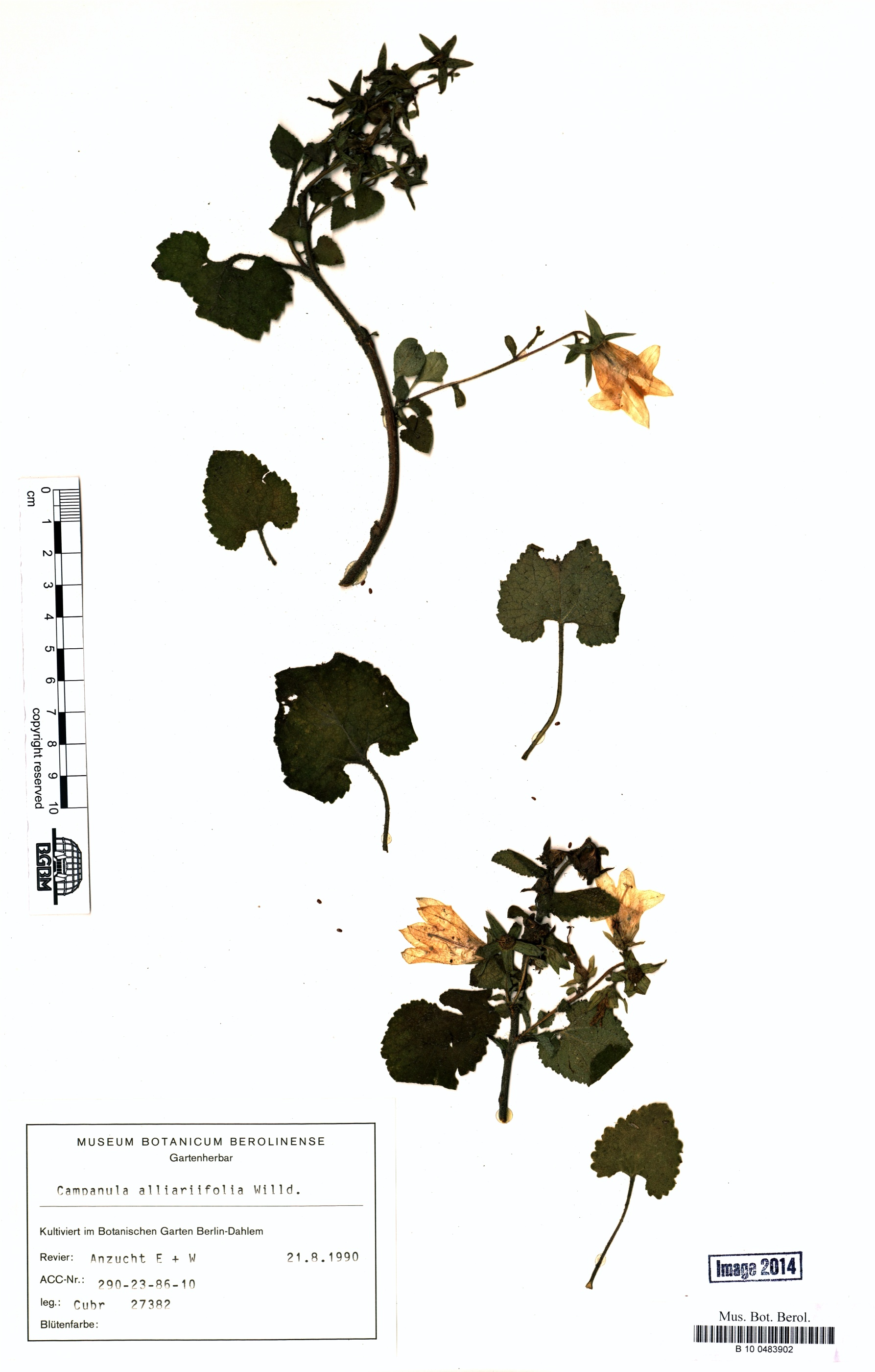 http://ww2.bgbm.org/herbarium/images/B/10/04/83/90/B_10_0483902.jpg