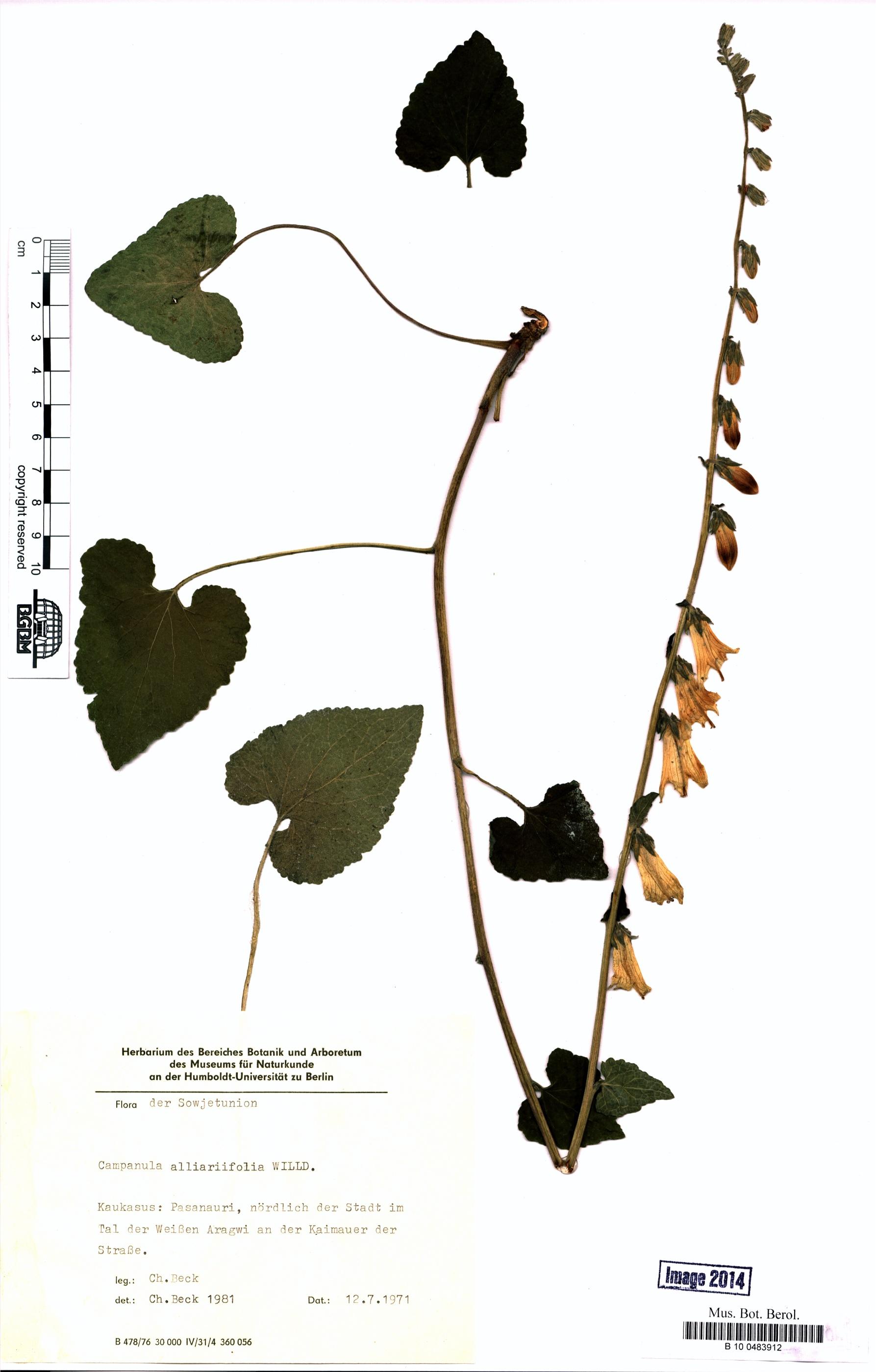 http://ww2.bgbm.org/herbarium/images/B/10/04/83/91/B_10_0483912.jpg