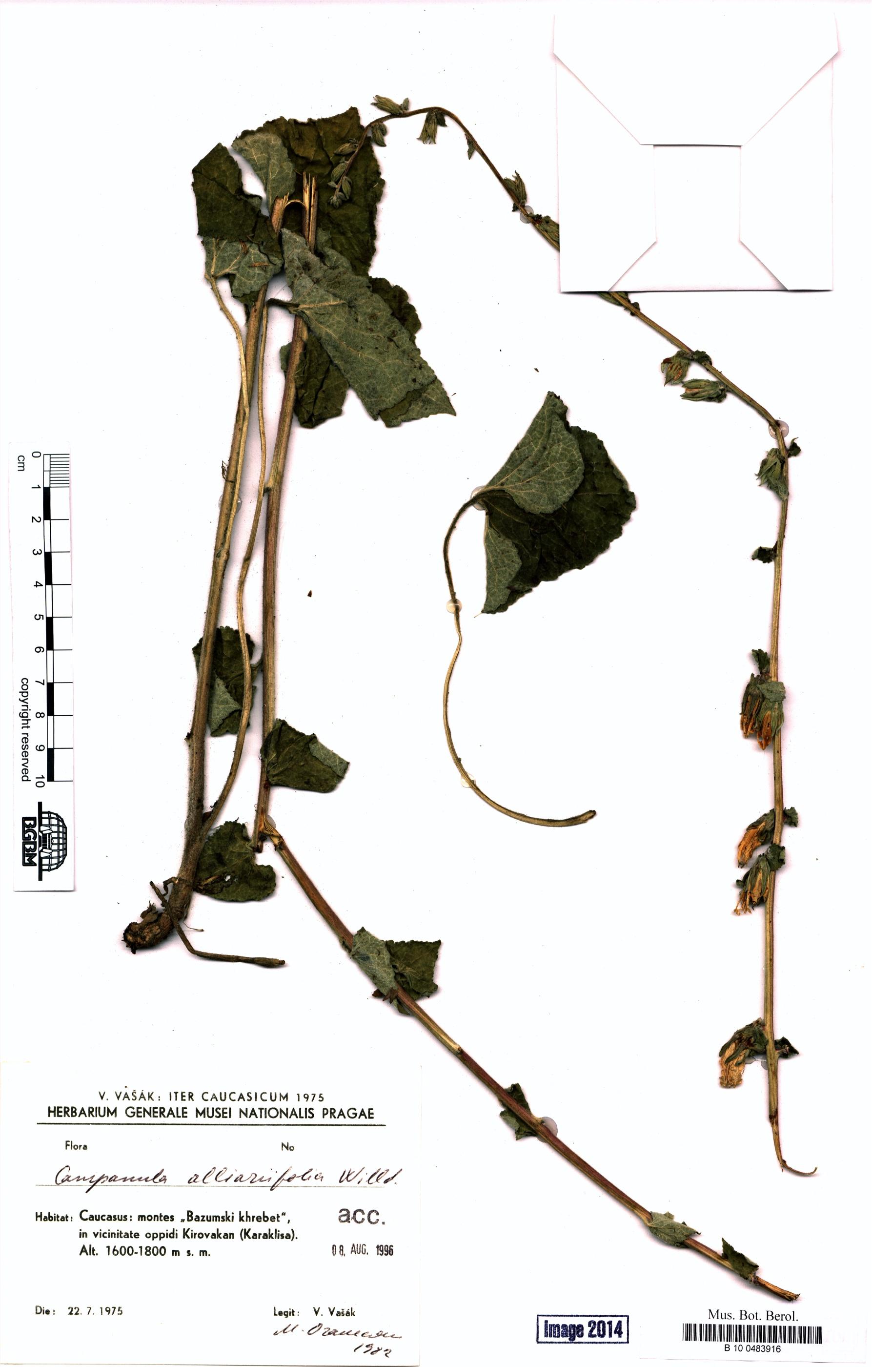 http://ww2.bgbm.org/herbarium/images/B/10/04/83/91/B_10_0483916.jpg
