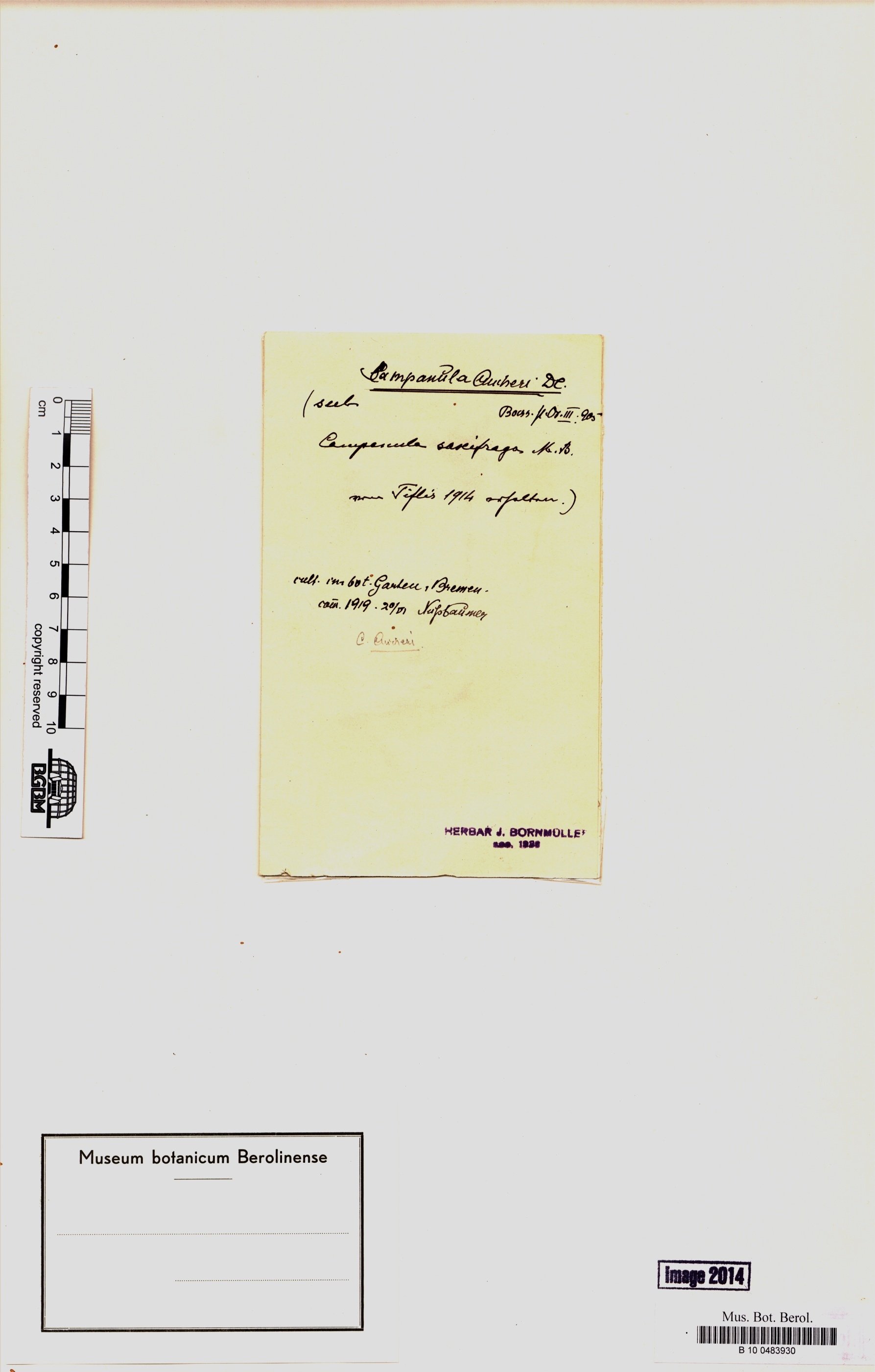 http://ww2.bgbm.org/herbarium/images/B/10/04/83/93/B_10_0483930__1.jpg