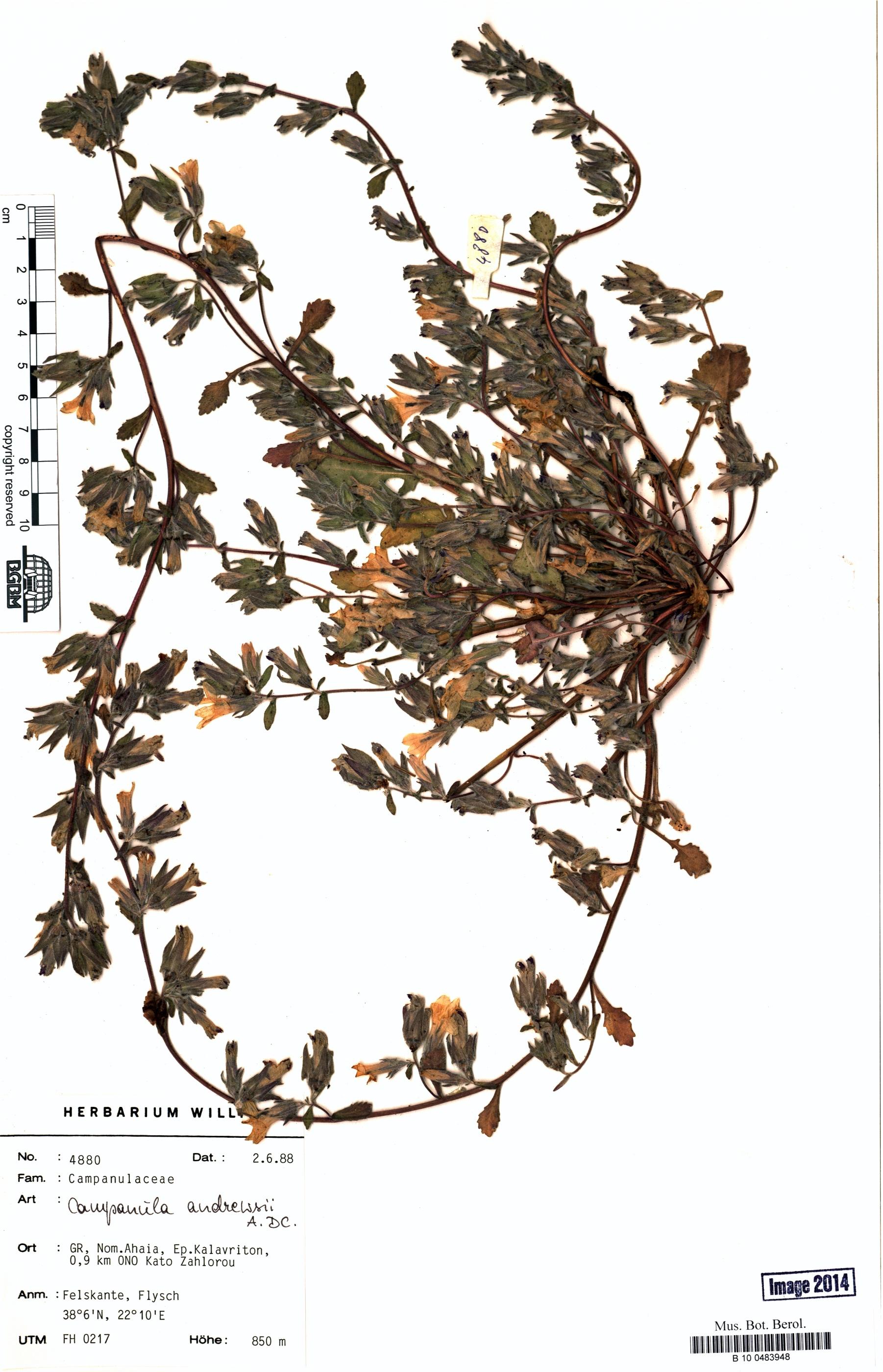 http://ww2.bgbm.org/herbarium/images/B/10/04/83/94/B_10_0483948.jpg