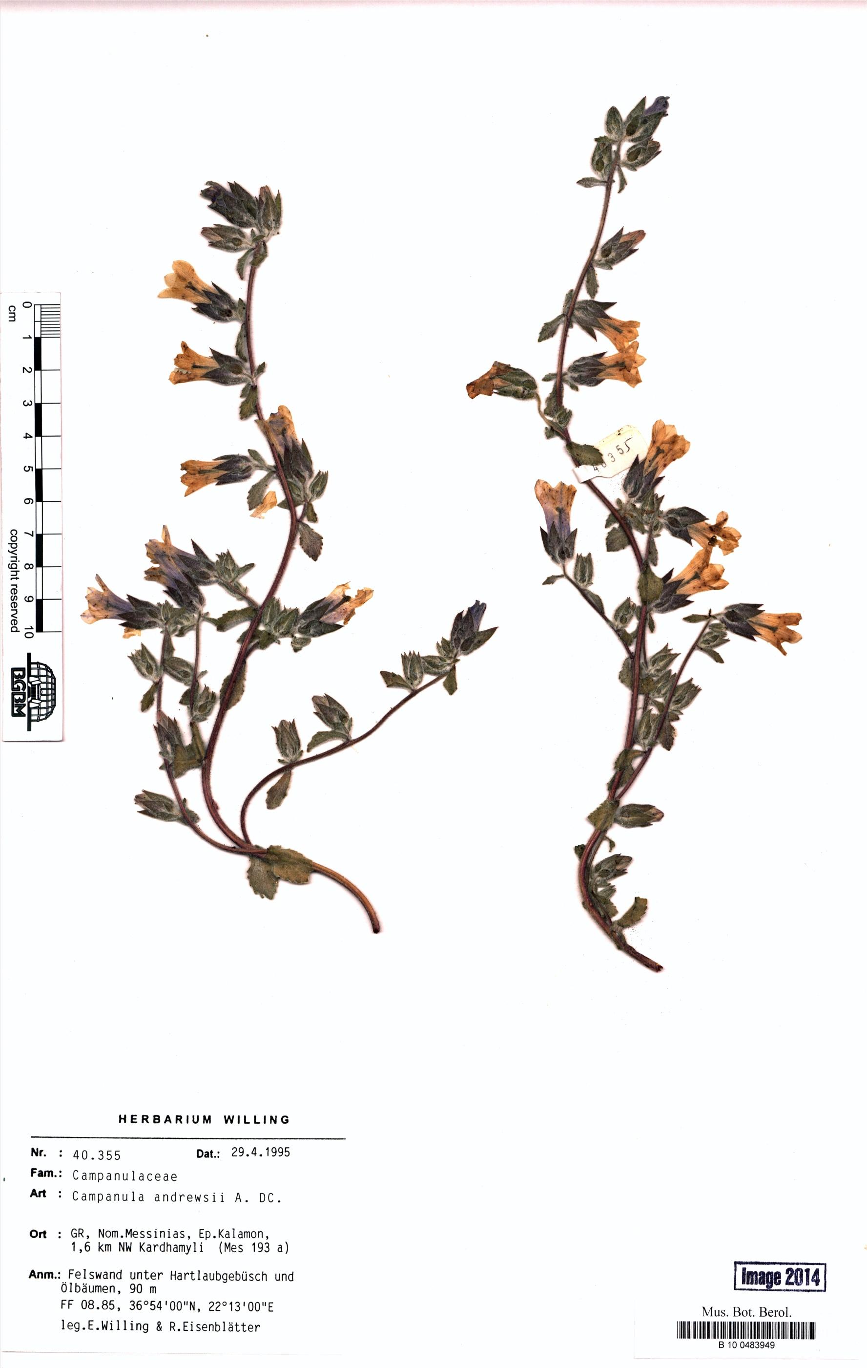 http://ww2.bgbm.org/herbarium/images/B/10/04/83/94/B_10_0483949.jpg