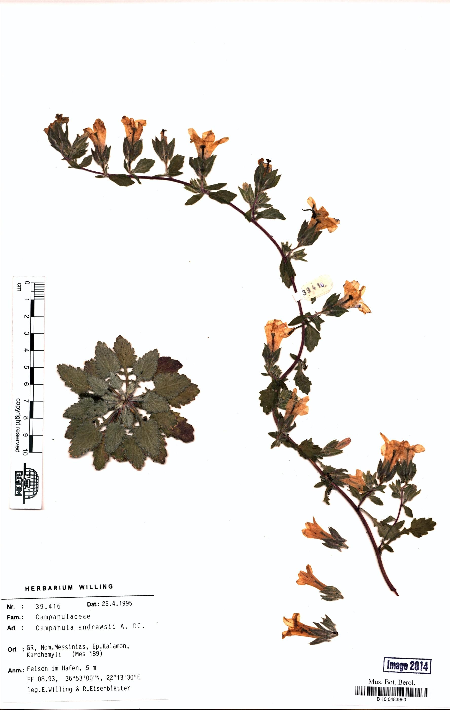 http://ww2.bgbm.org/herbarium/images/B/10/04/83/95/B_10_0483950.jpg