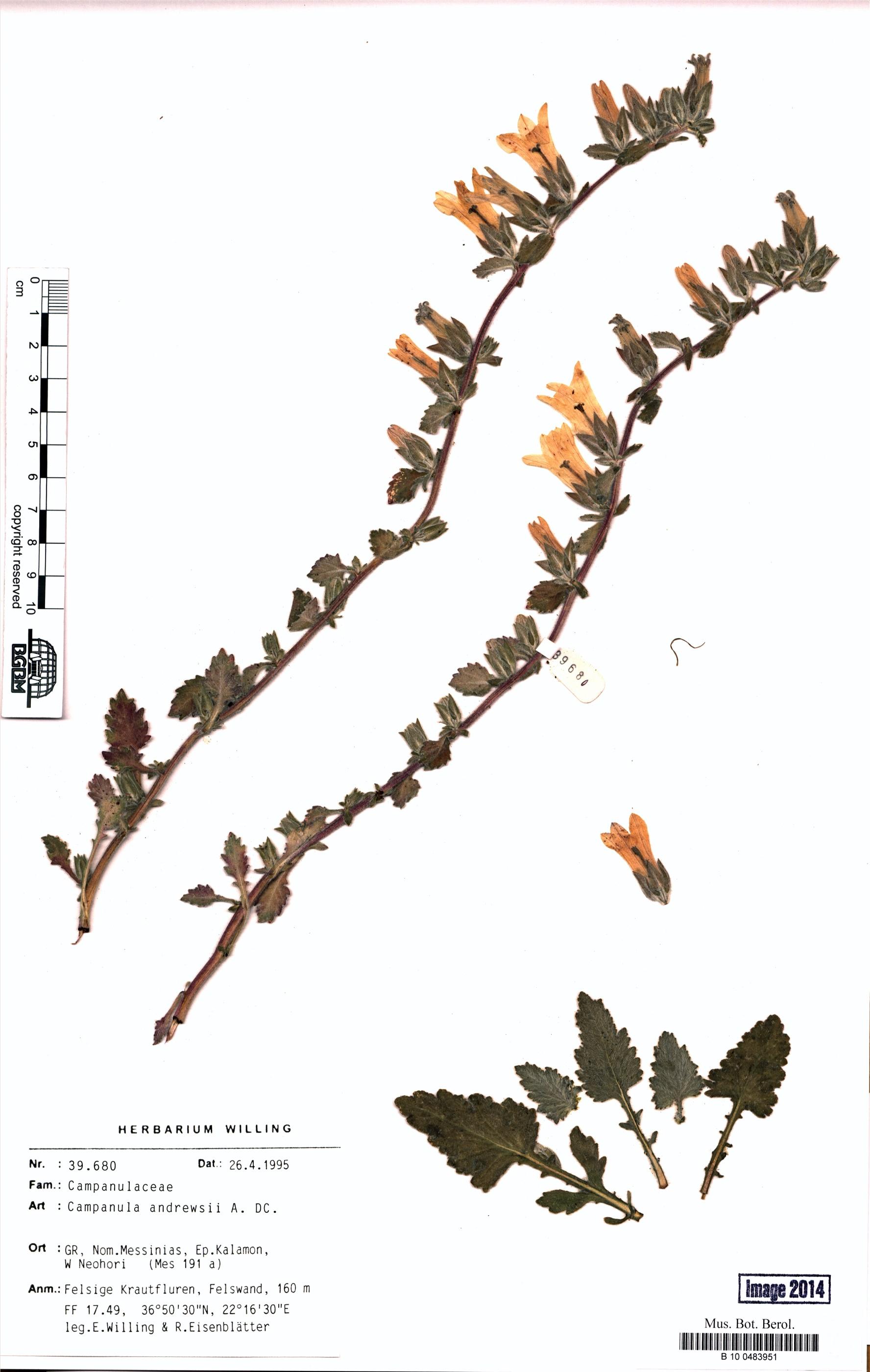 http://ww2.bgbm.org/herbarium/images/B/10/04/83/95/B_10_0483951.jpg