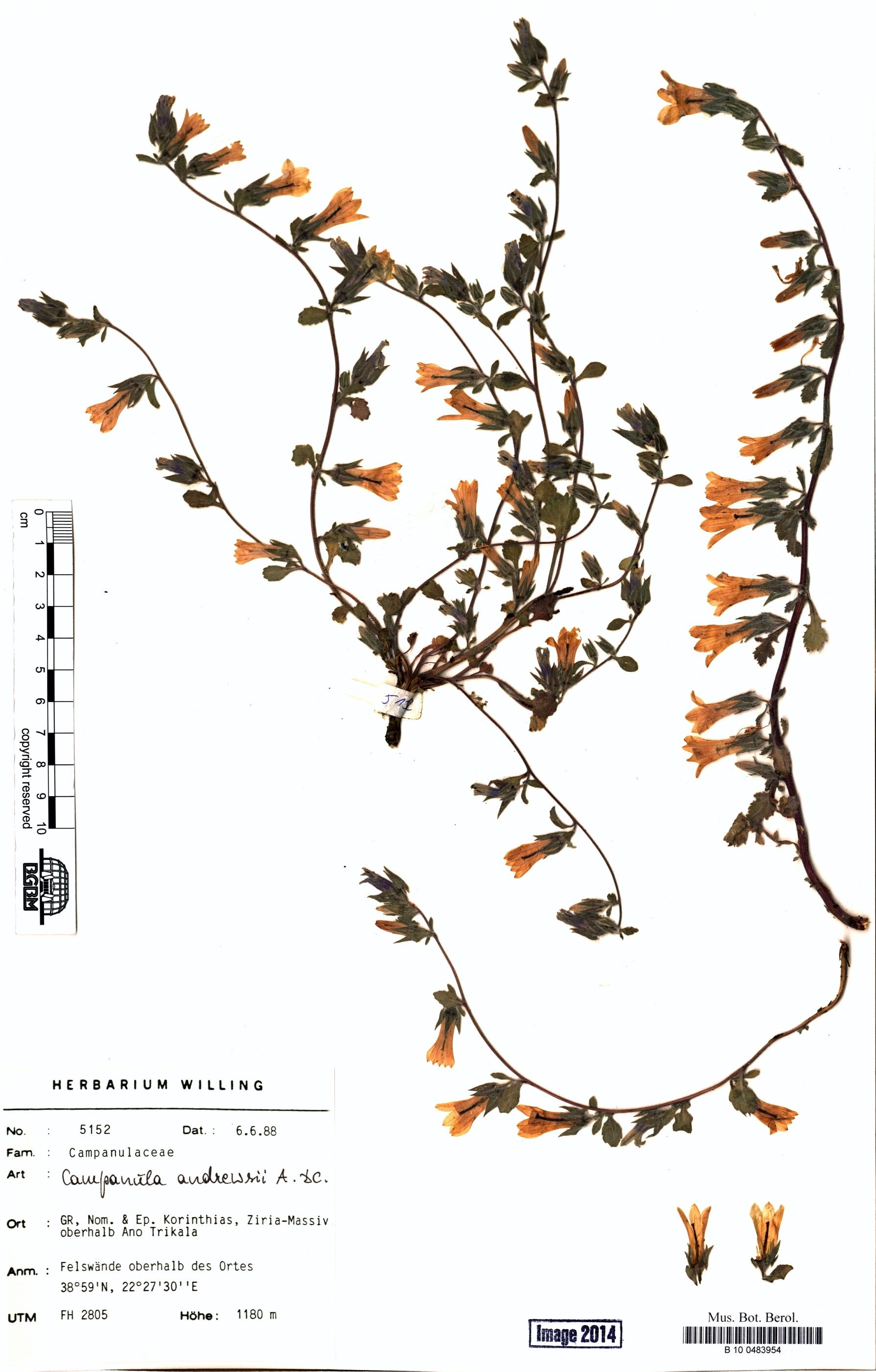 http://ww2.bgbm.org/herbarium/images/B/10/04/83/95/B_10_0483954.jpg
