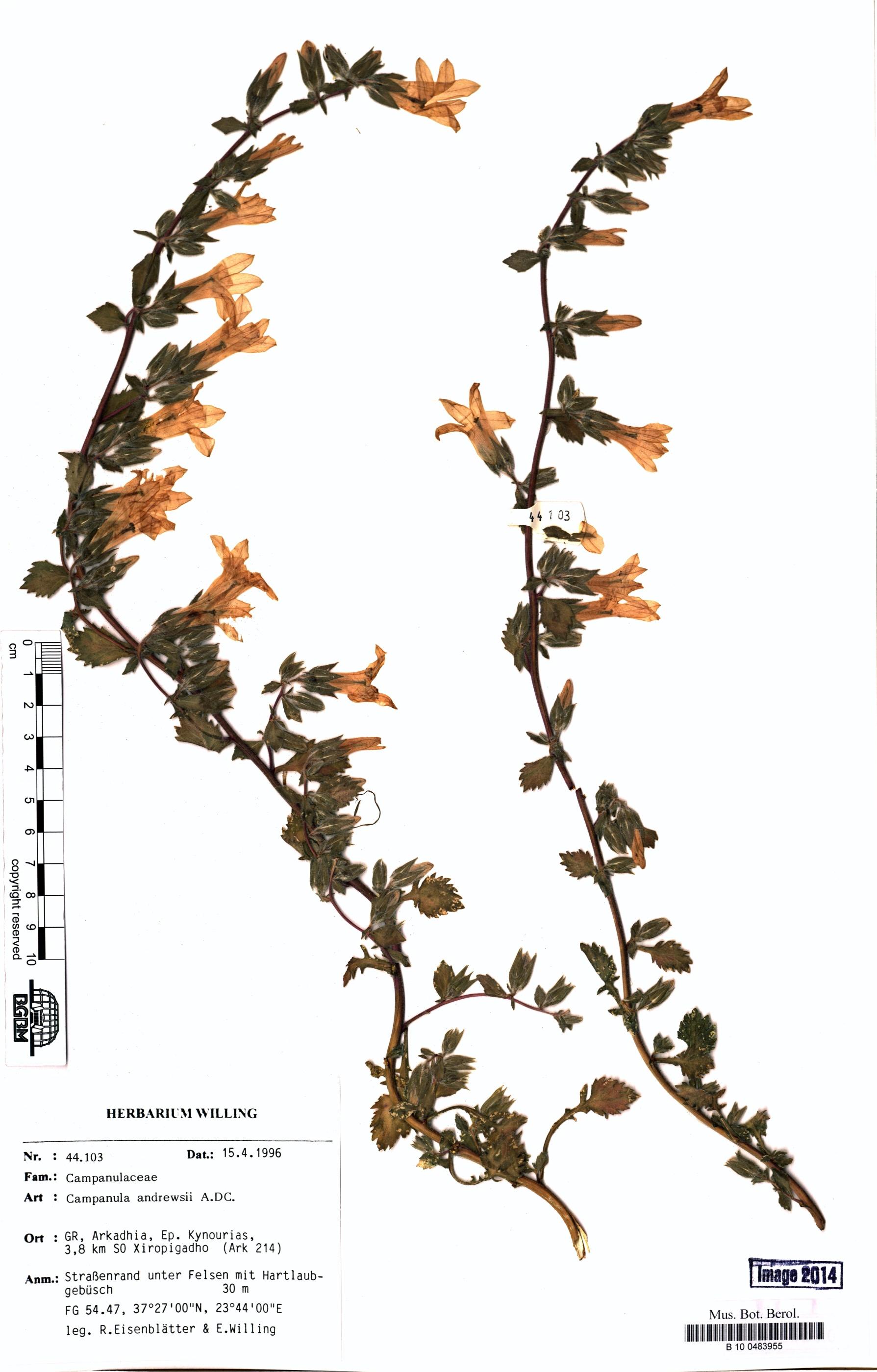 http://ww2.bgbm.org/herbarium/images/B/10/04/83/95/B_10_0483955.jpg