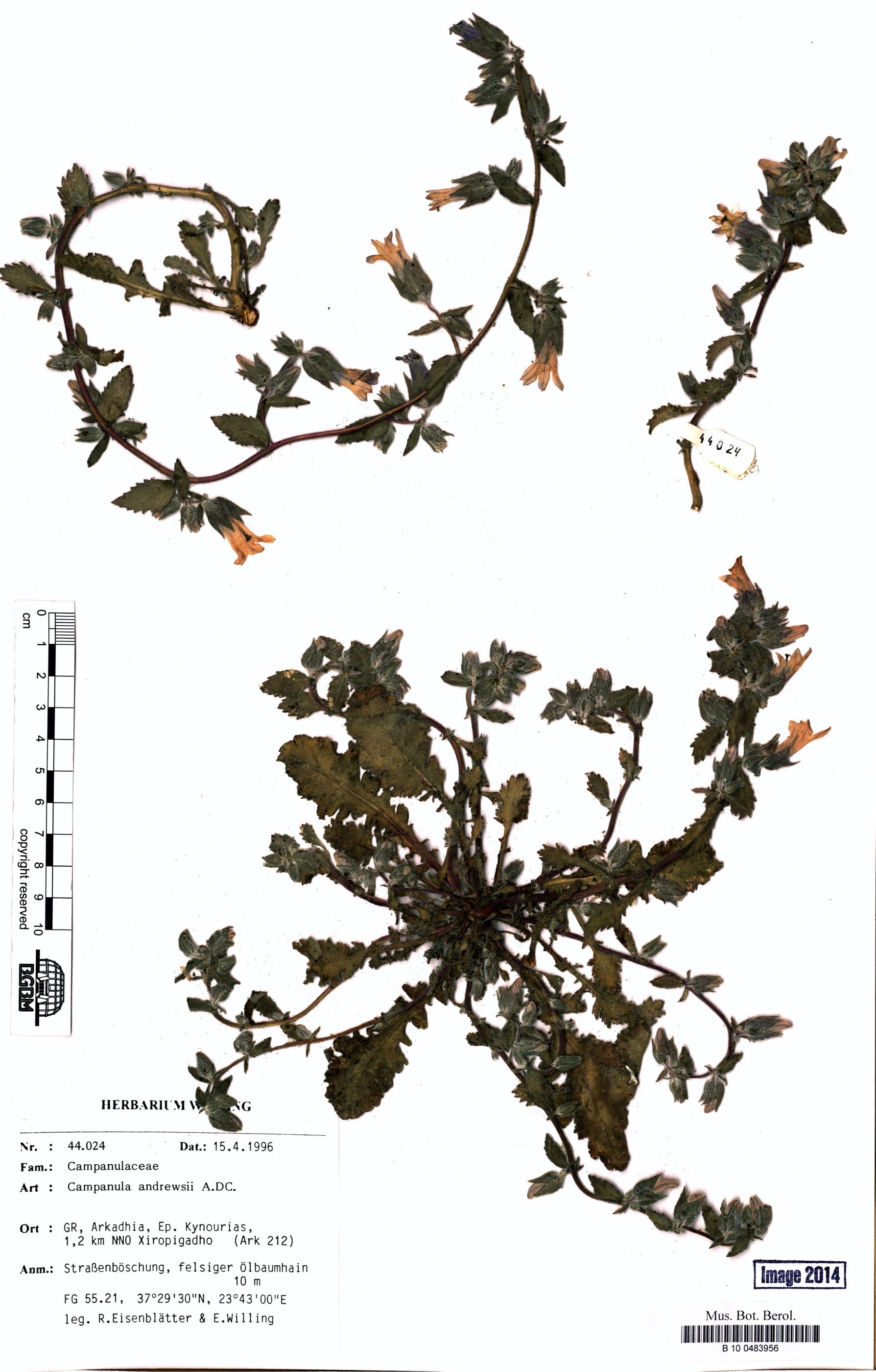 http://ww2.bgbm.org/herbarium/images/B/10/04/83/95/B_10_0483956.jpg