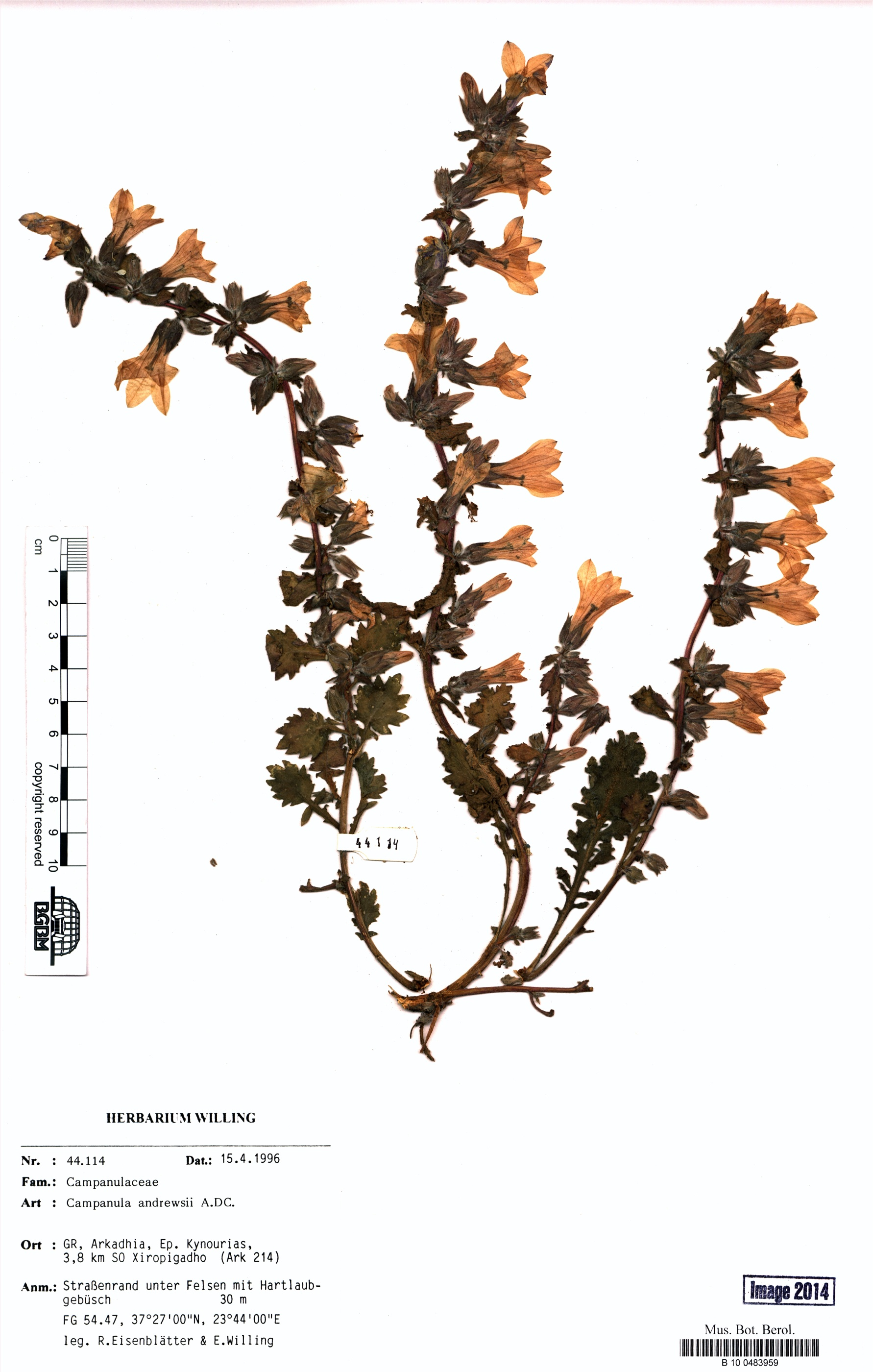 http://ww2.bgbm.org/herbarium/images/B/10/04/83/95/B_10_0483959.jpg