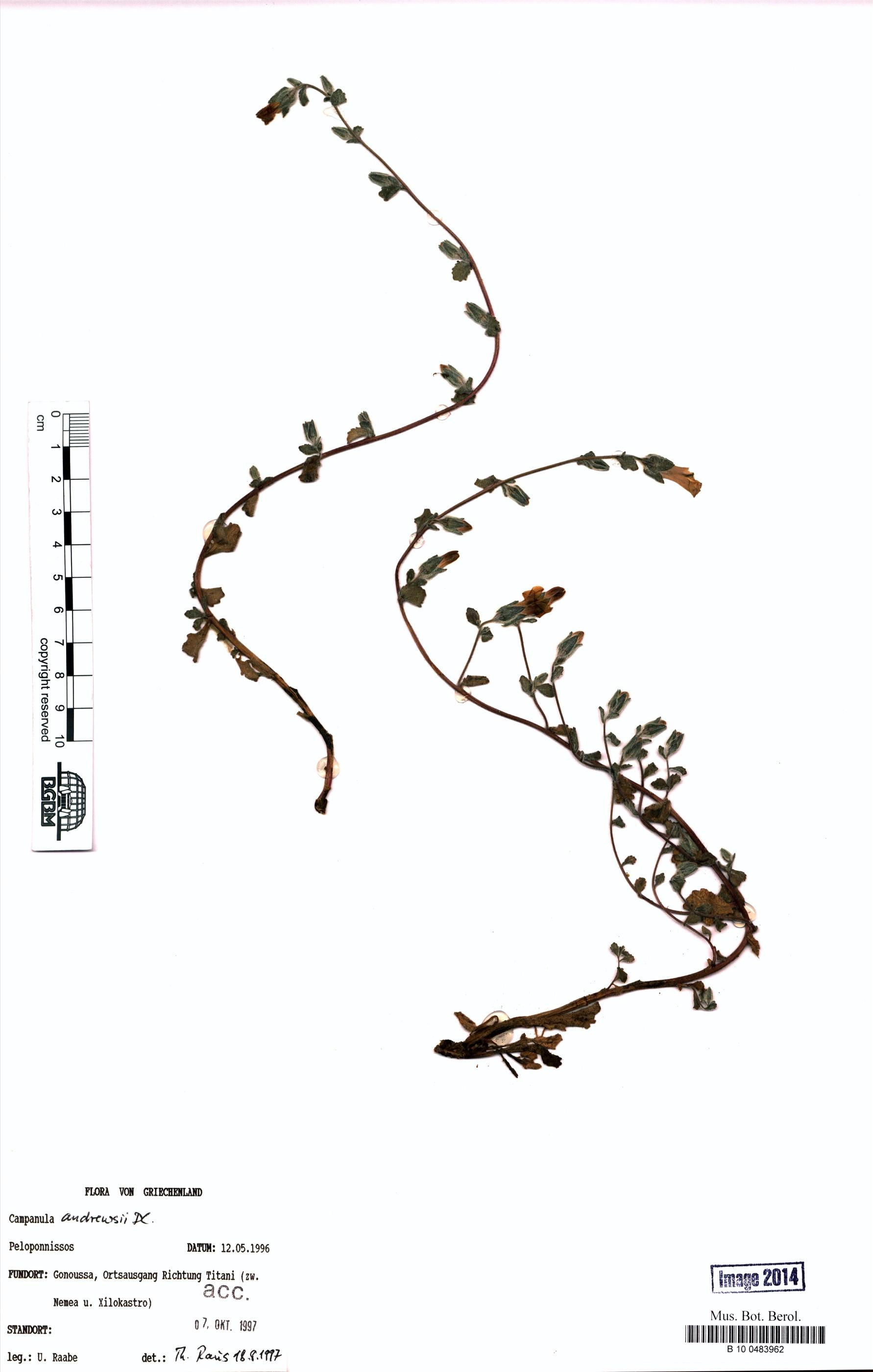 http://ww2.bgbm.org/herbarium/images/B/10/04/83/96/B_10_0483962.jpg
